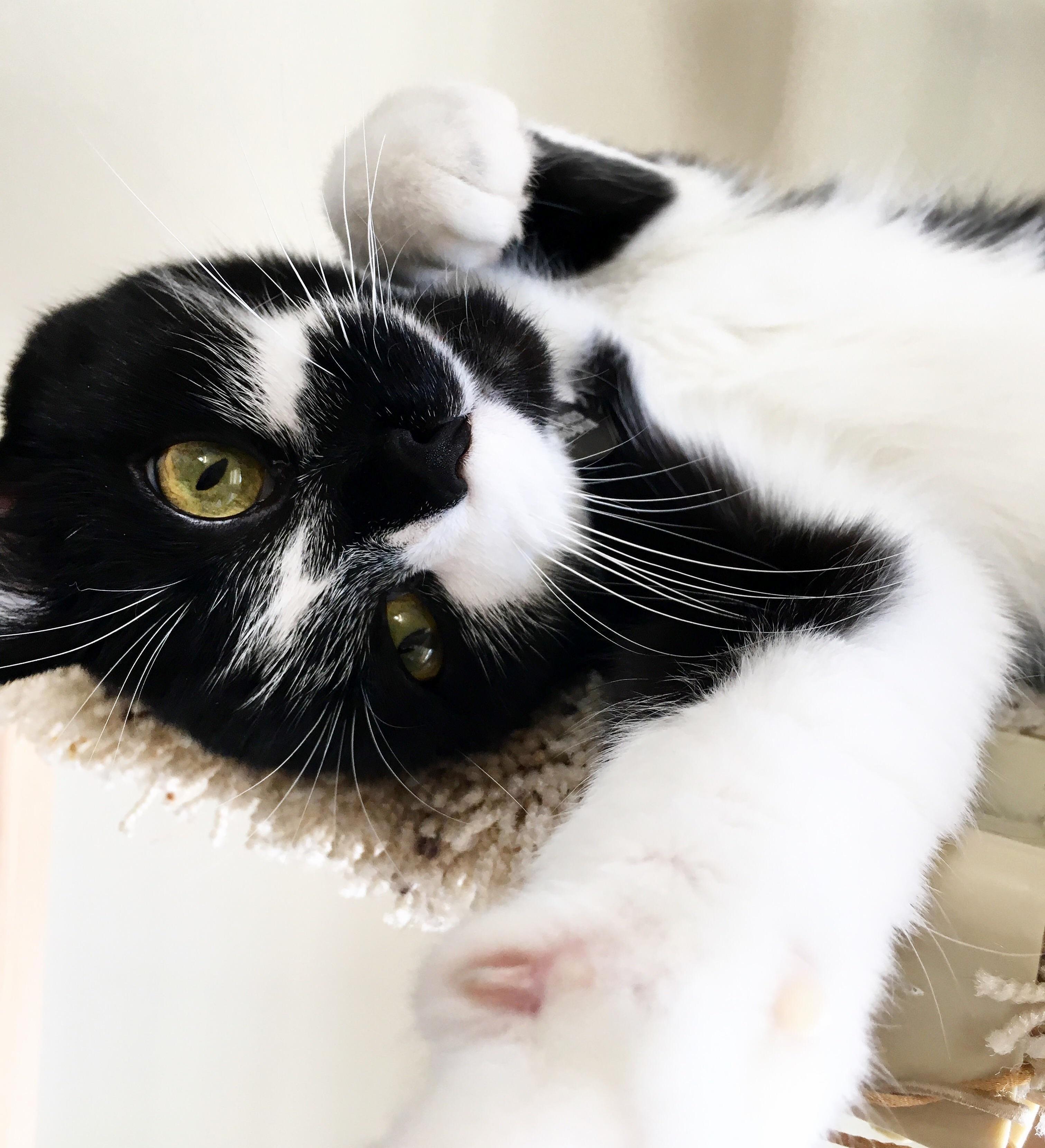 Luna the most photogenic kitty cat.
