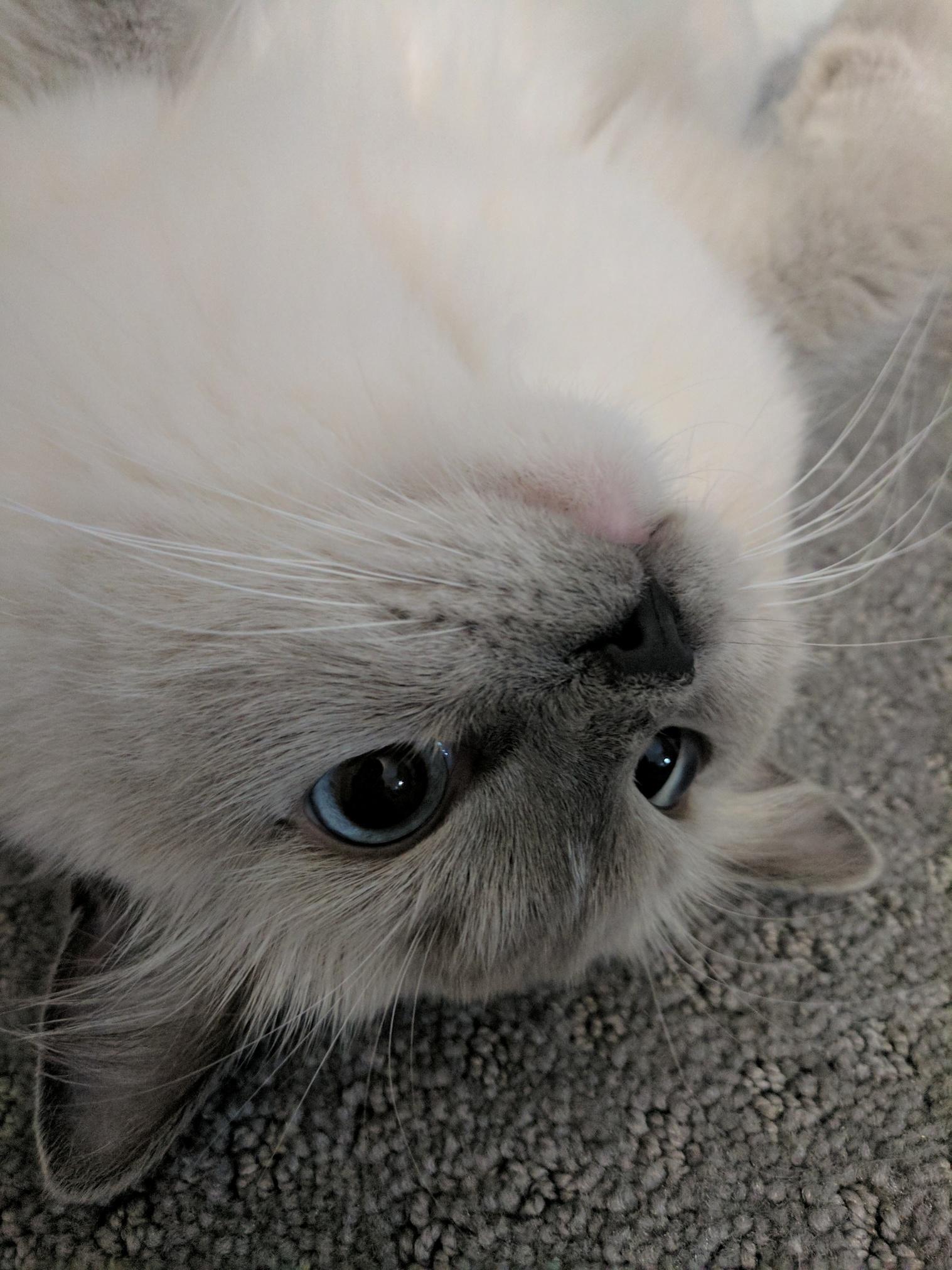 Meet ciel