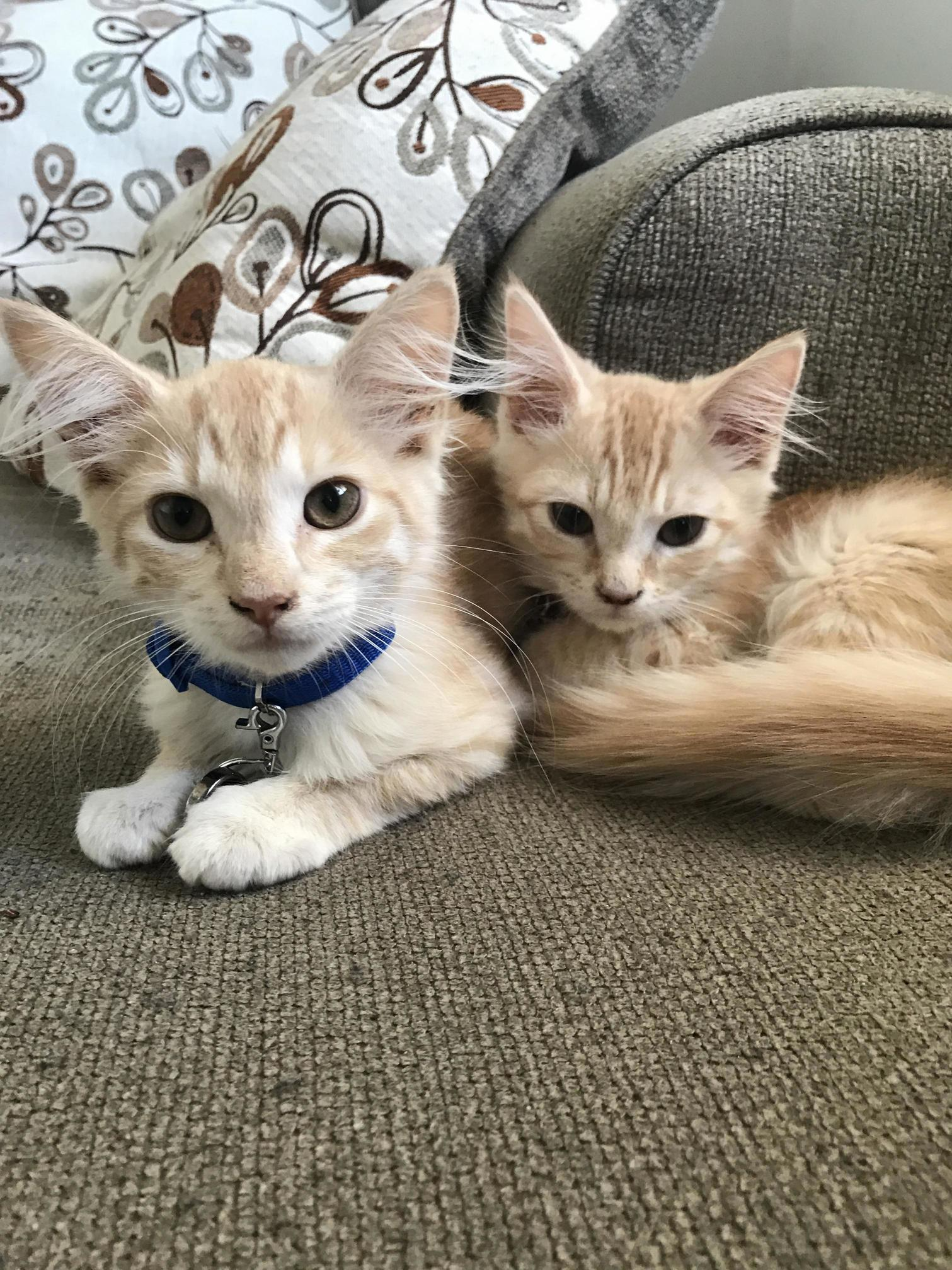 Meet moose and nibbler. rescued from the pensacola humane society