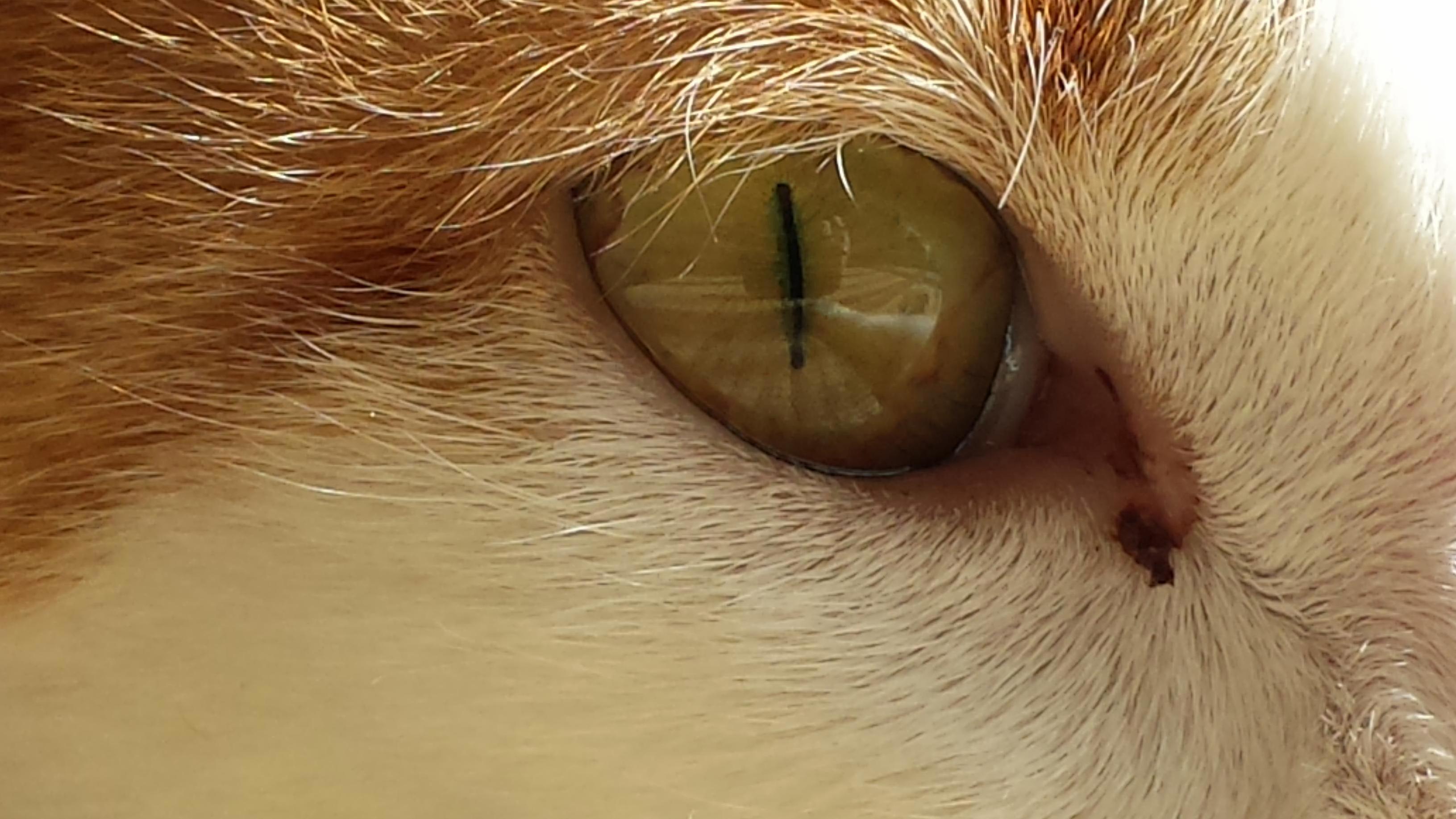 Mias eye