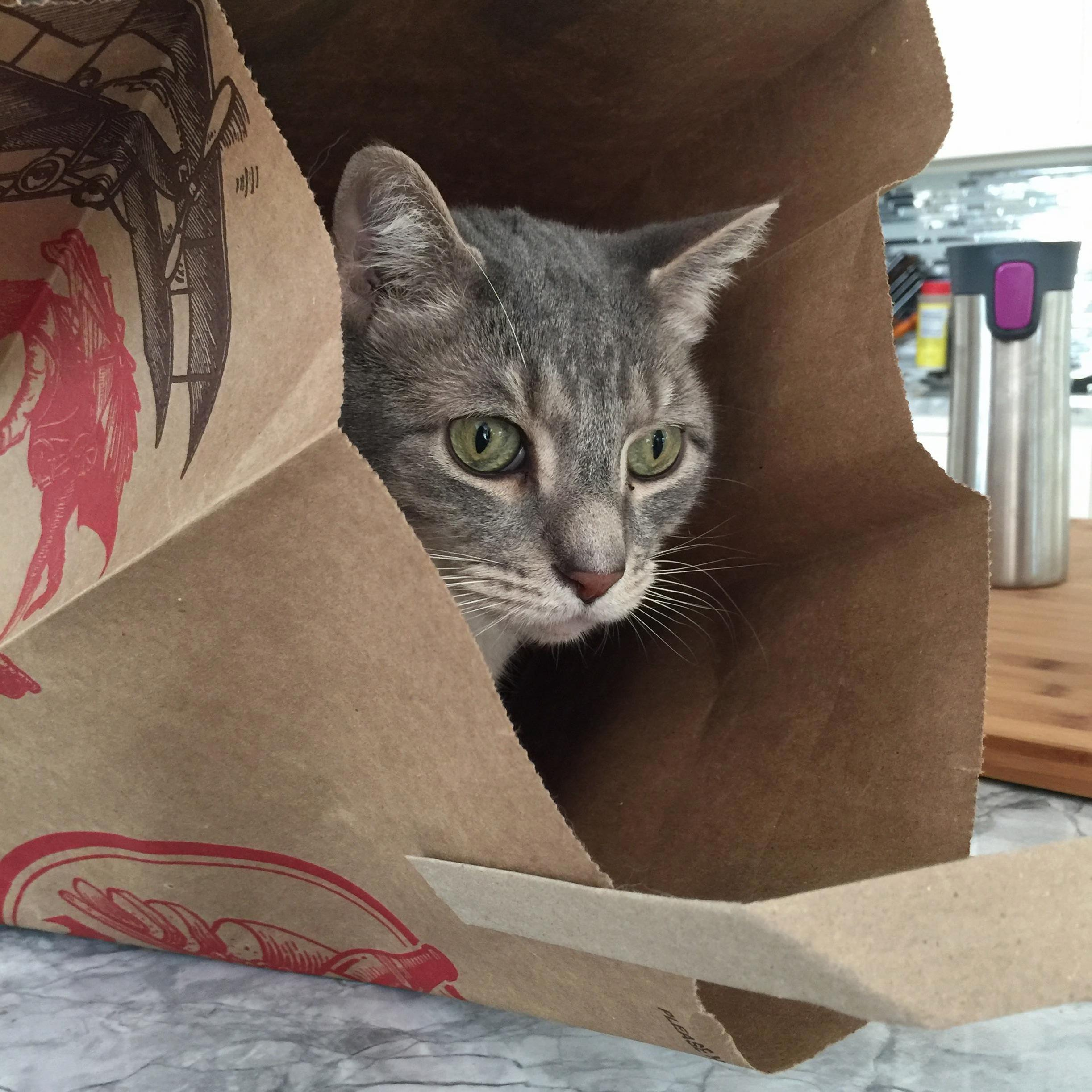 Milo in a bag.