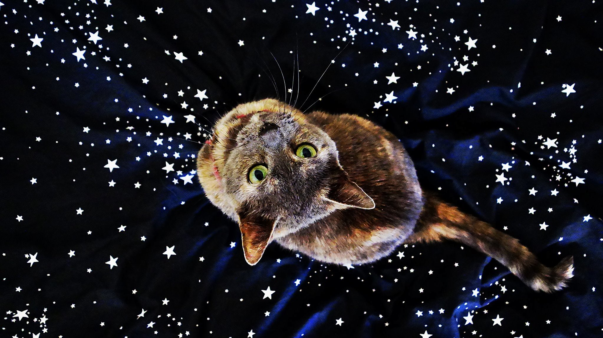 My cat in space