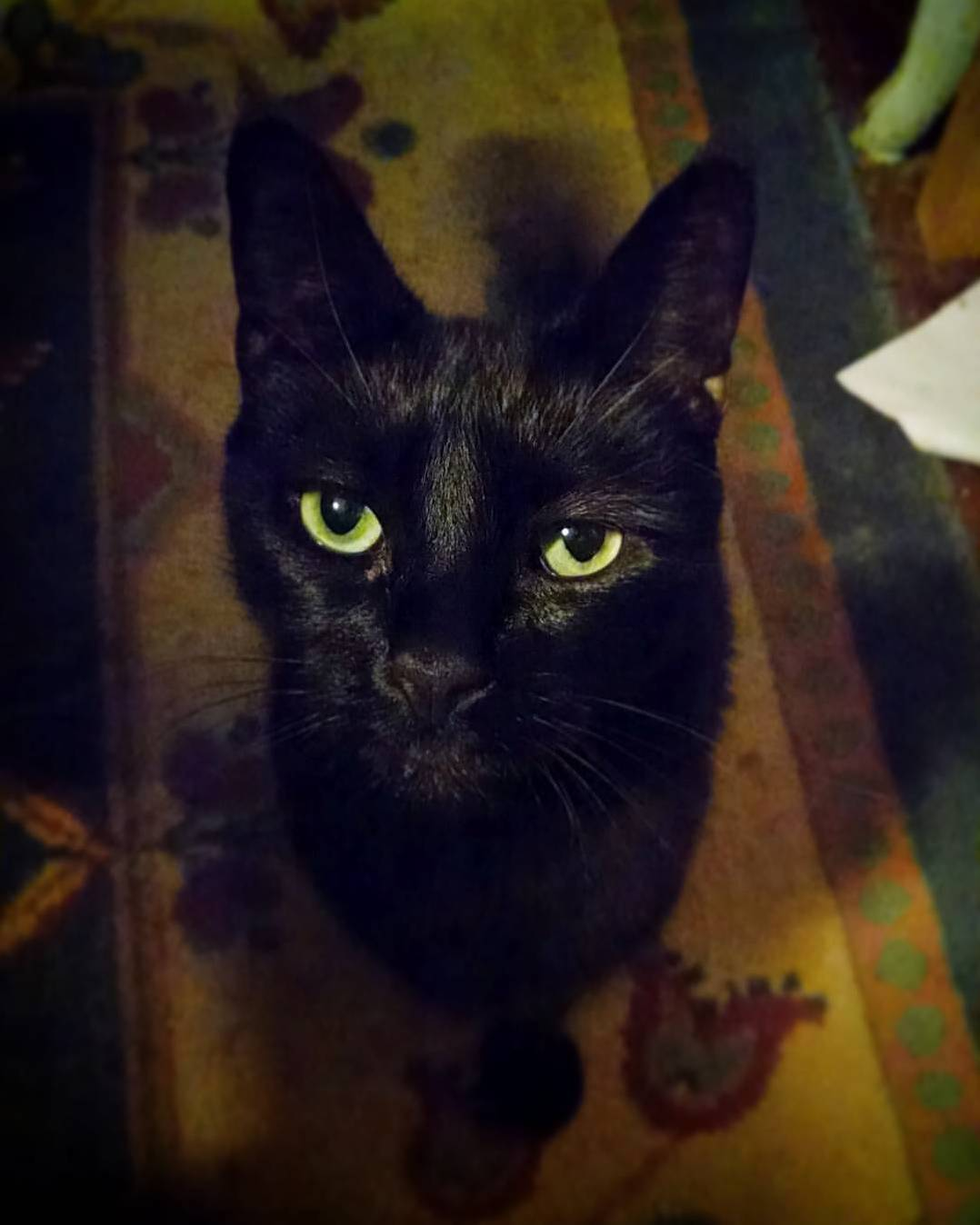 Kitty Did Not Approve Of Me Taking Pictures. | Cute cats ...
