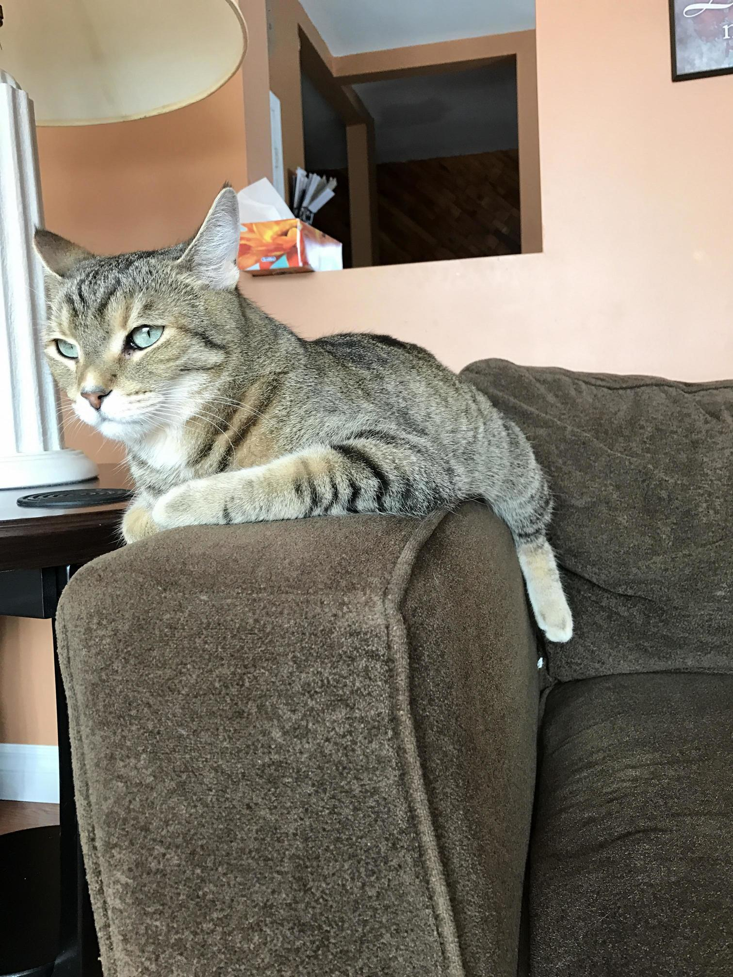 My cat sits on the couch armrest like this