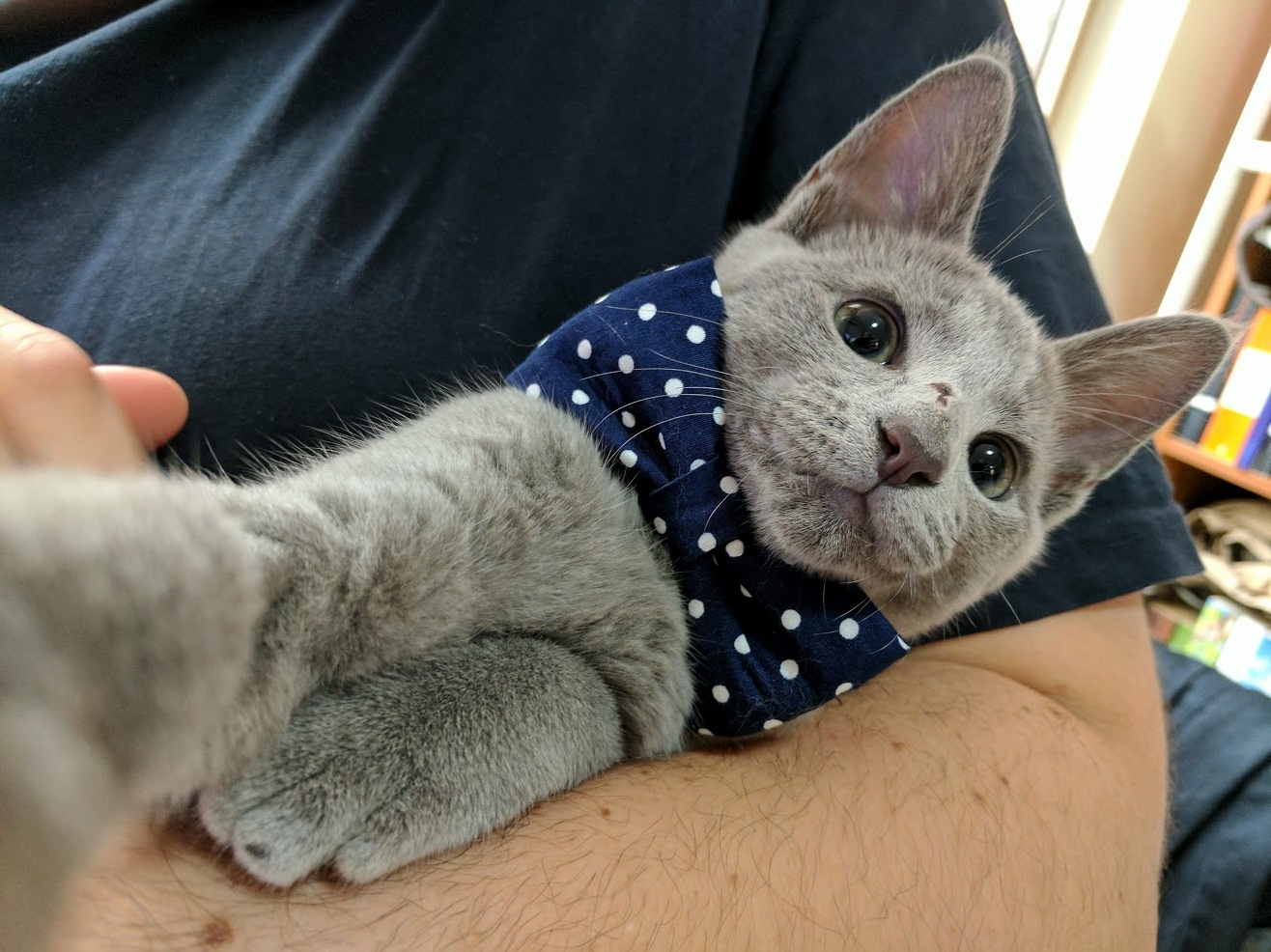 My kitten all dressed up for a selfie
