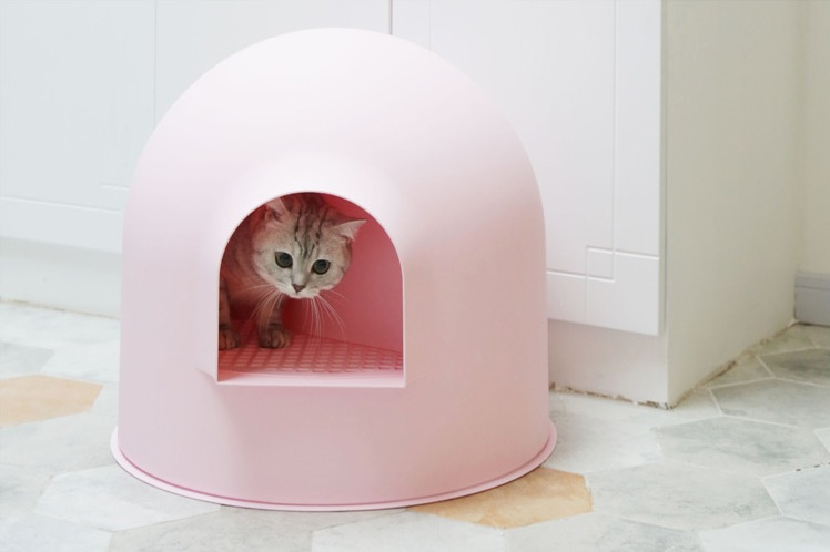 My little princess was shy and then retracted her igloo cat litter box