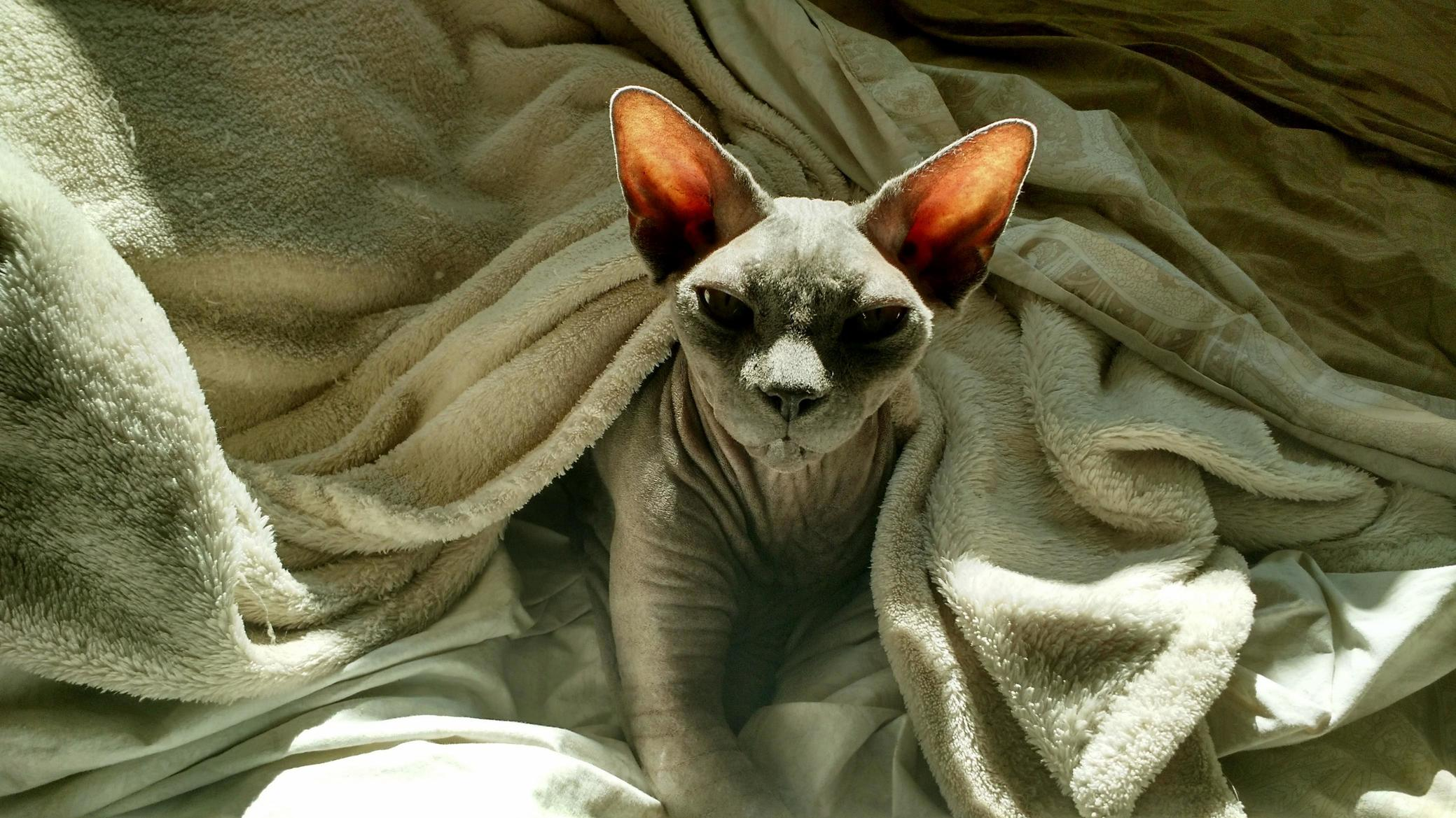 My sphynx went down the rainbow road yesterday