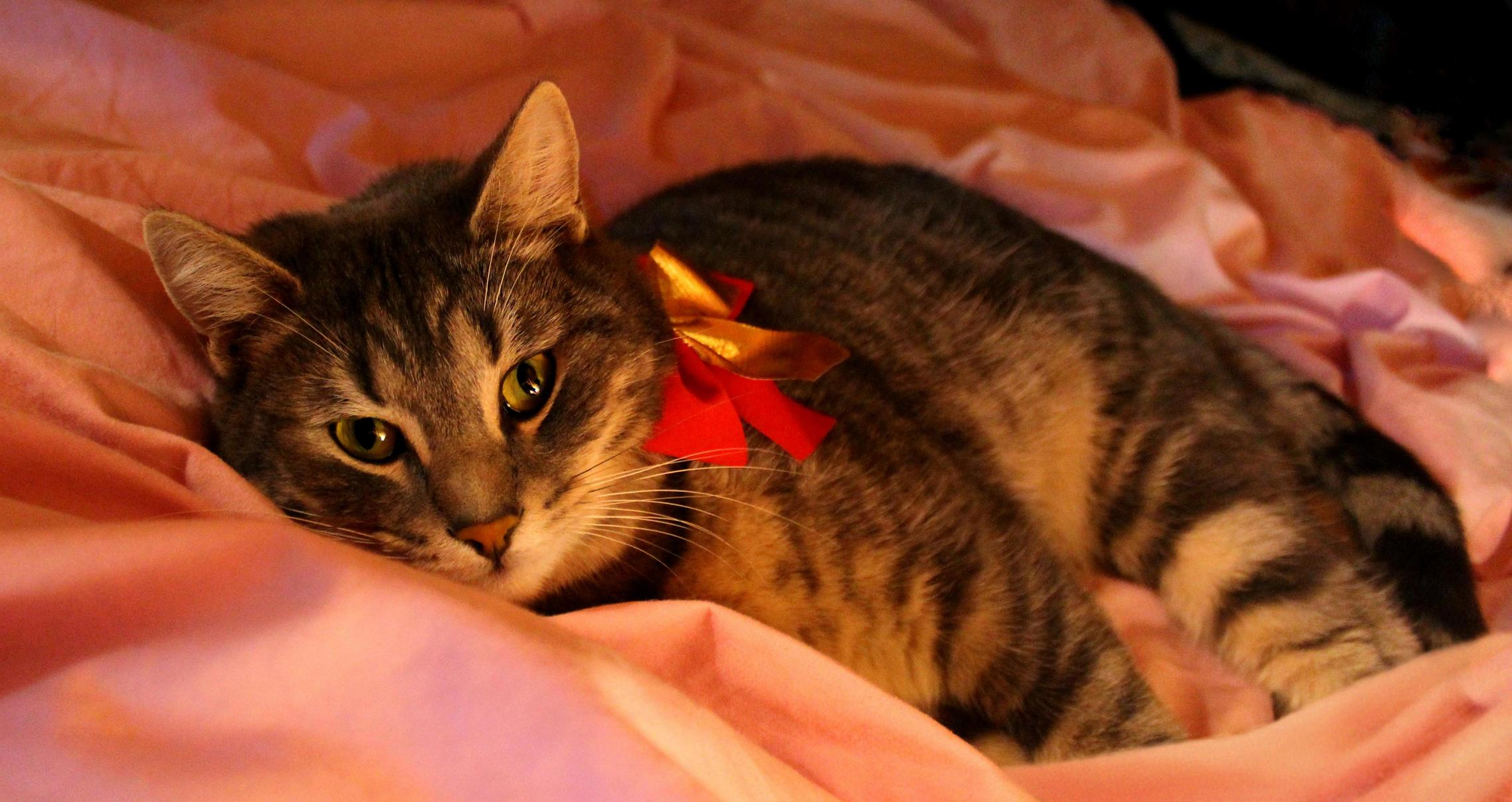 Niko wore a bow this past christmas
