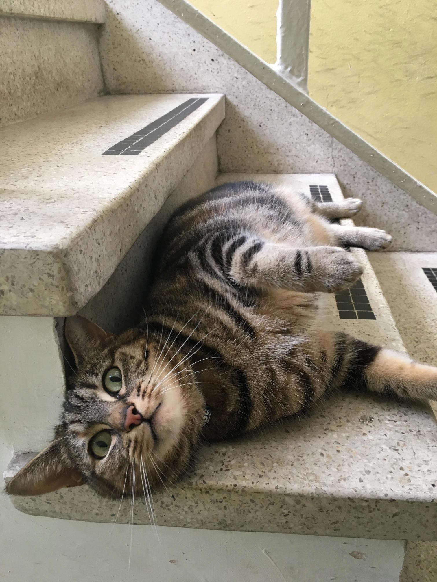 Nutty neighbourhood cat can barely hold still for a picture just wants dem scritches too much