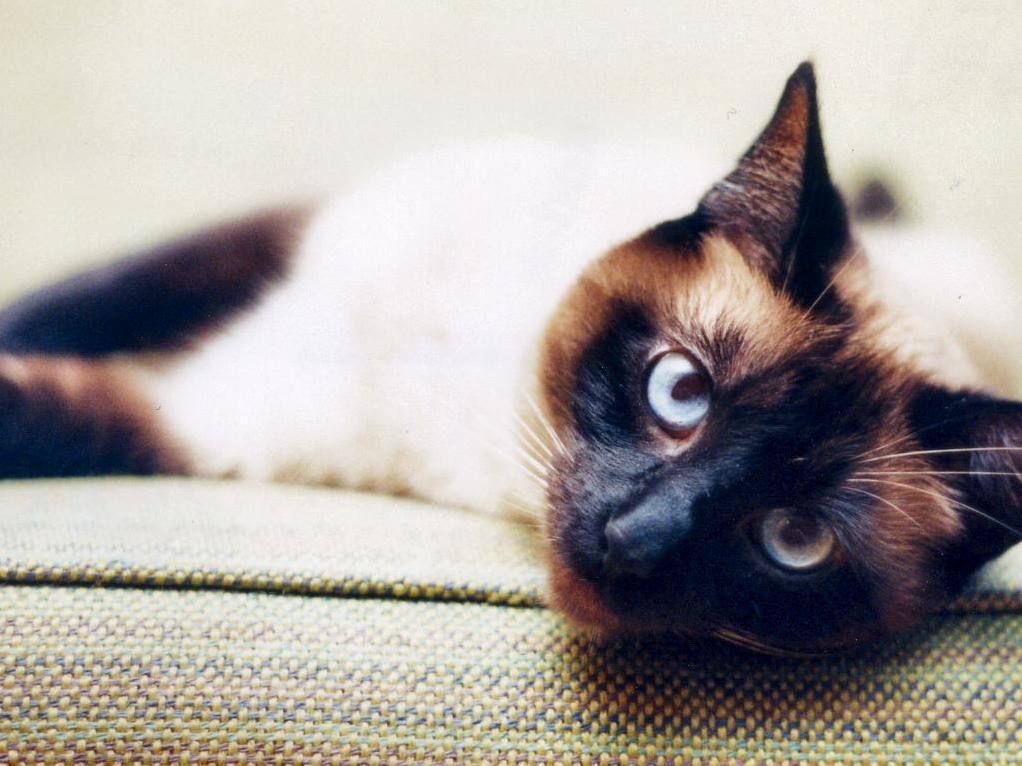 Ol blue eyes