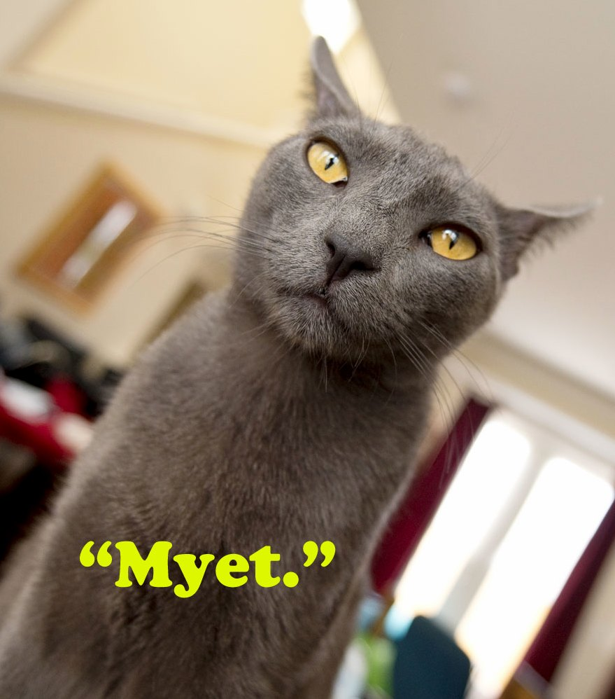 Our russian blue is denying any contact with kremlin