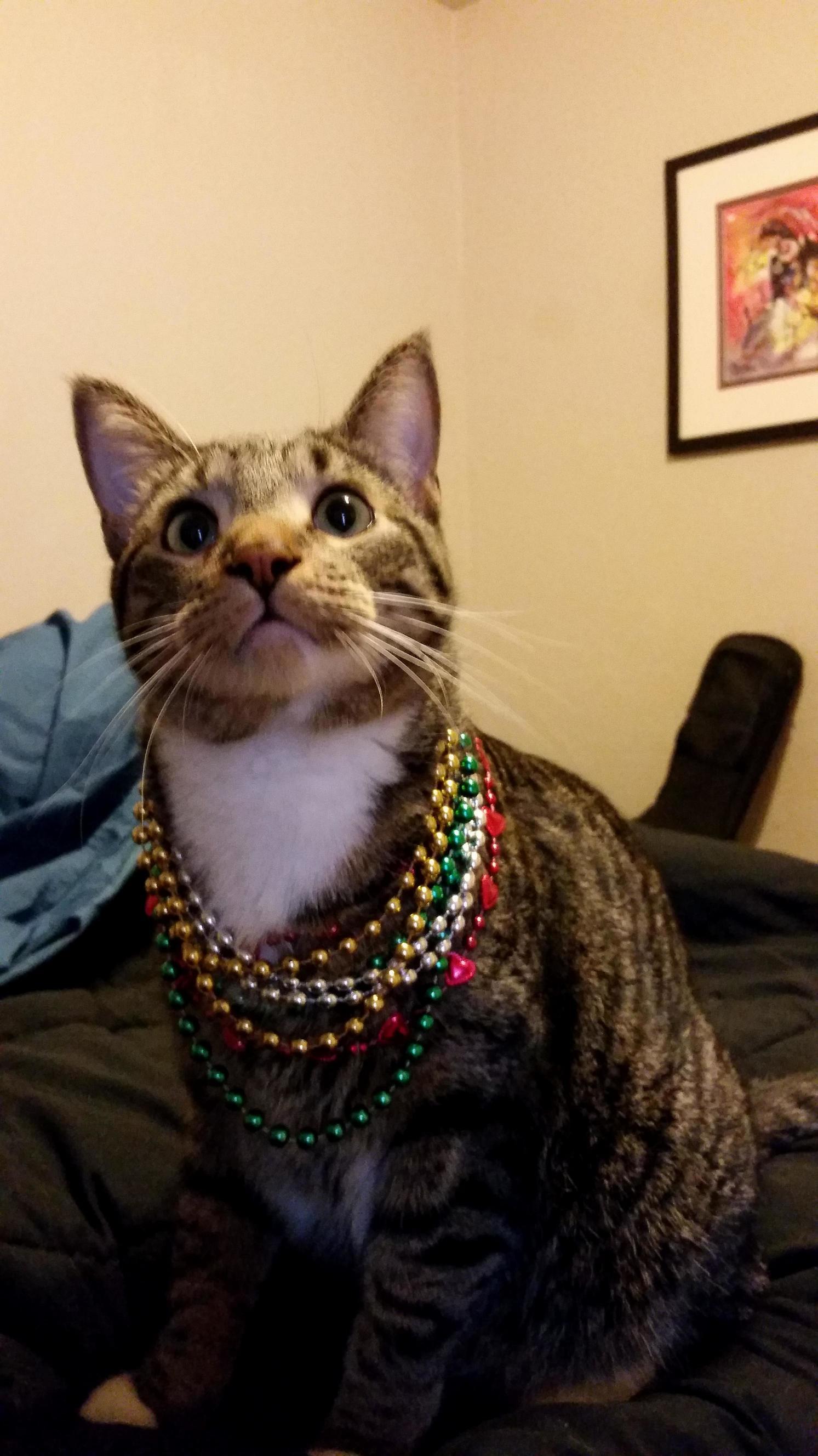 Pip gets into the mardi gras spirit