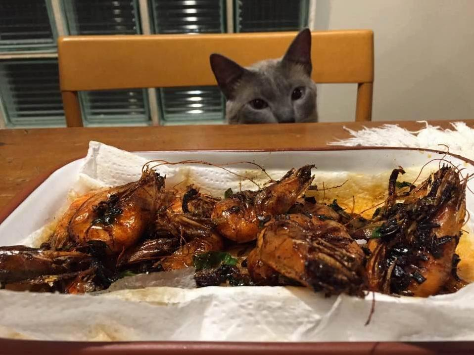 Please god please give me one of those shrimp.