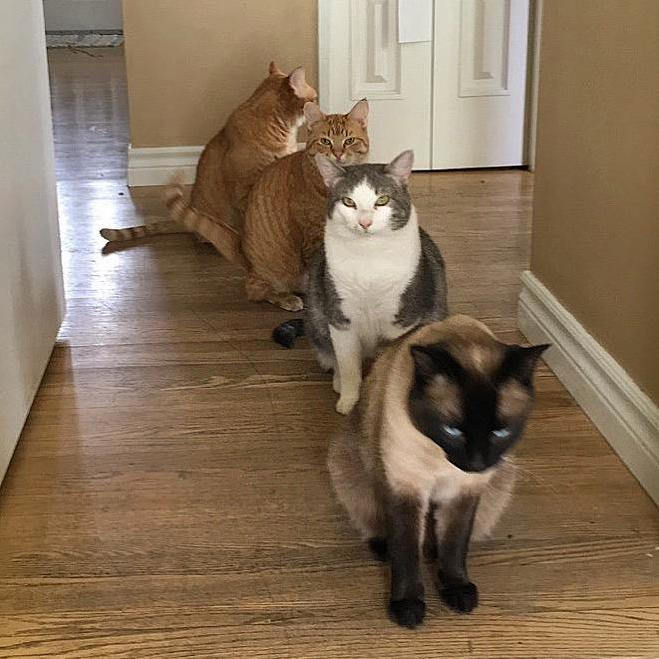 Potato quality but this only lasted a second. cats are organizing single file the end of the world is nigh