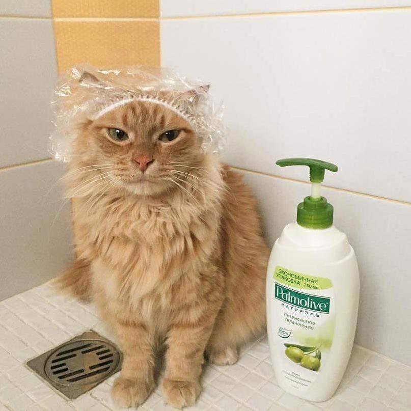 Pussy needs a cleaning.