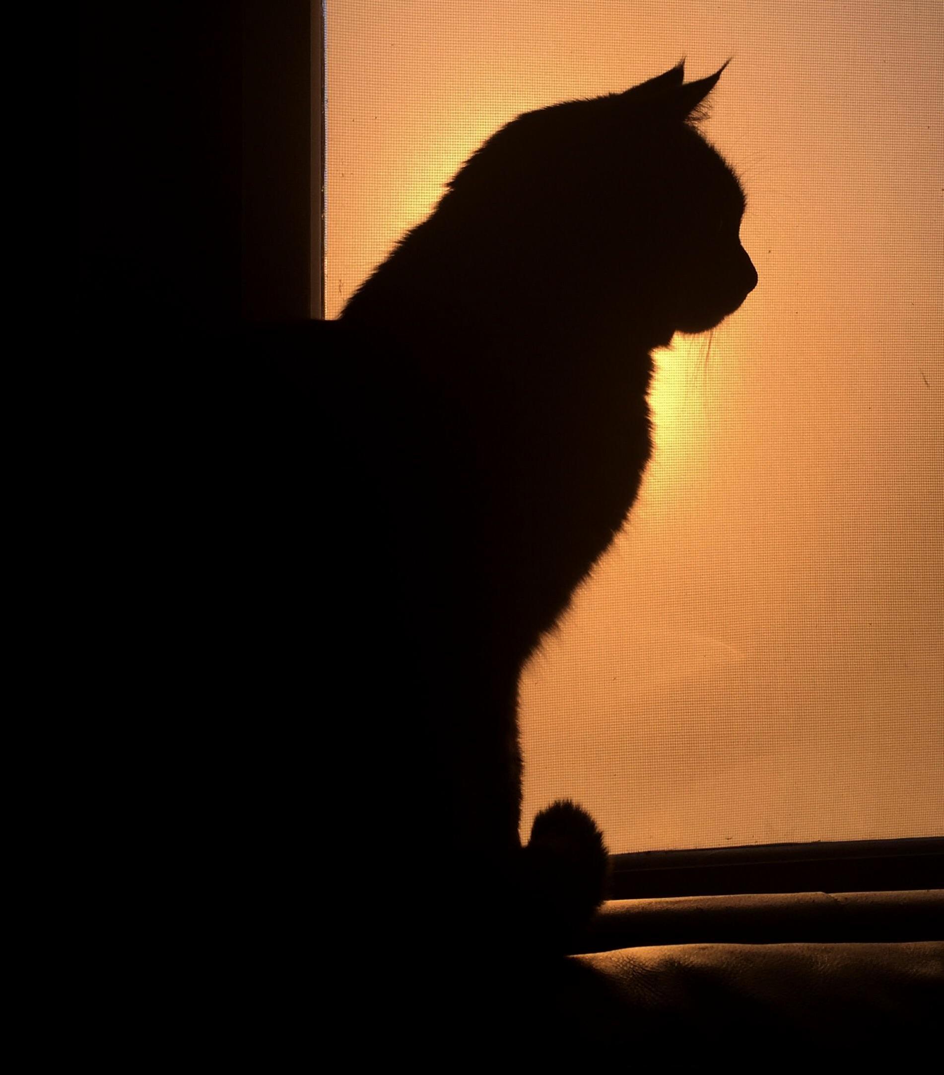 Q enjoying the sunset.