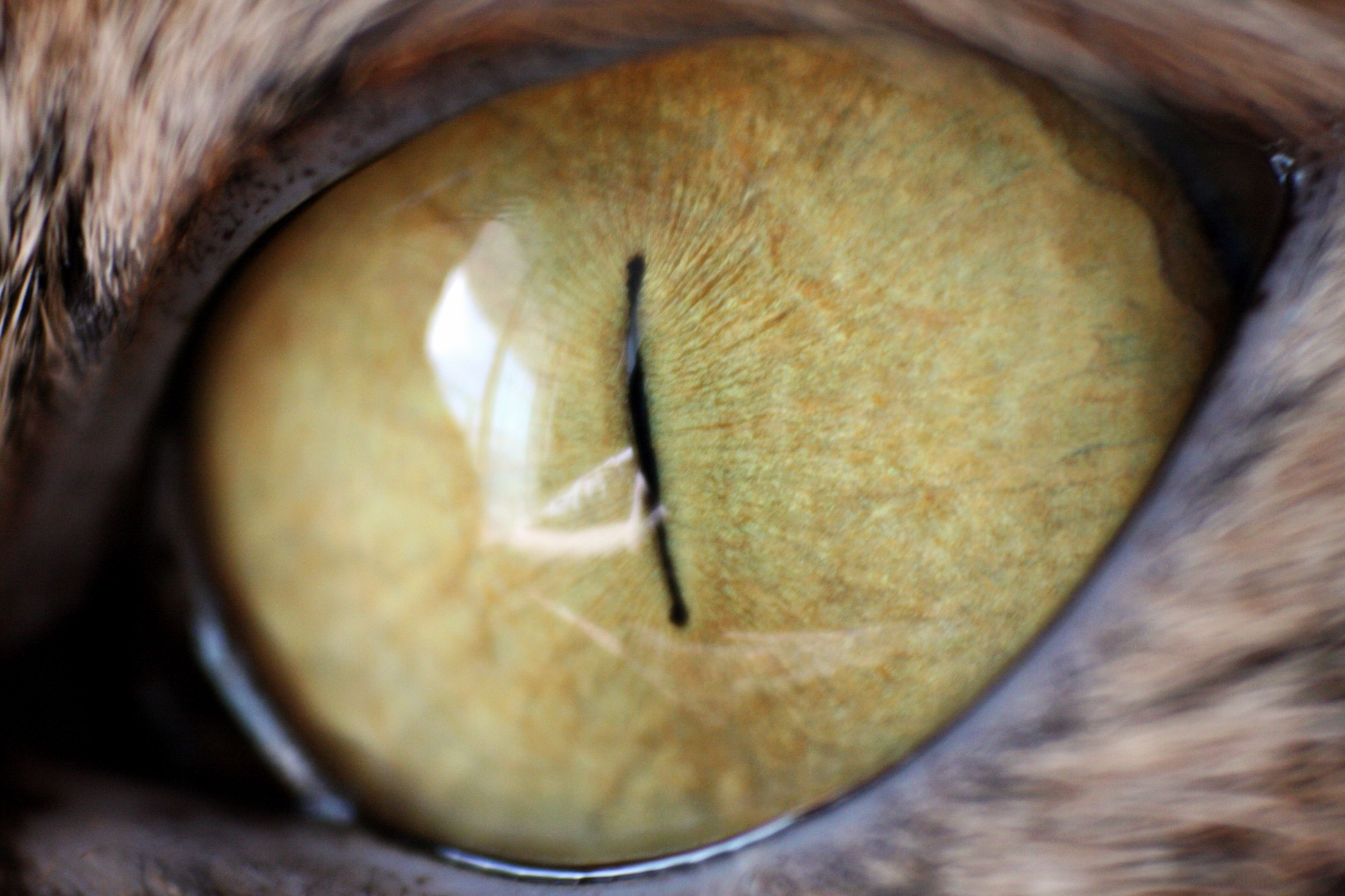 Self macro cat eye
