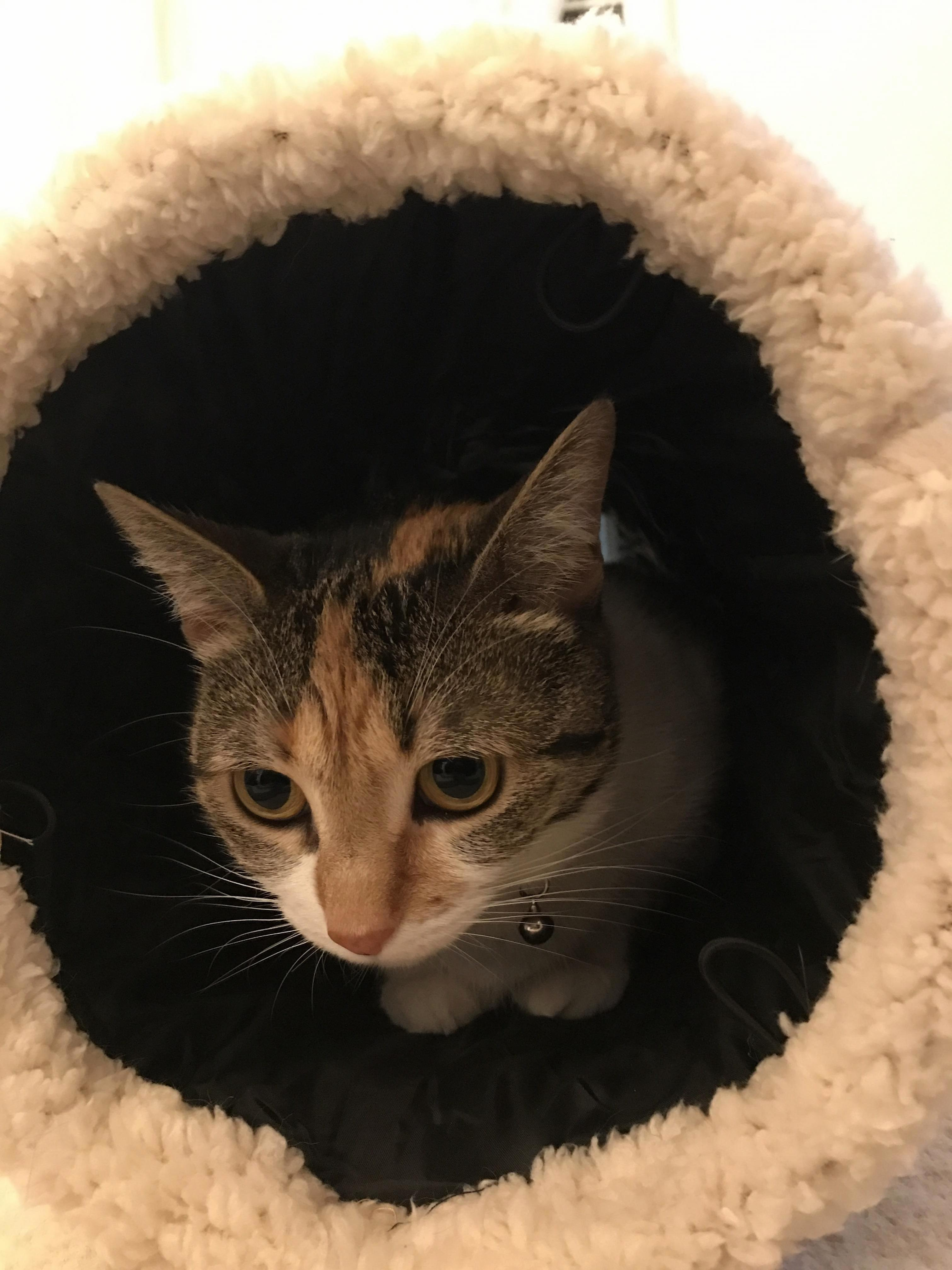She loves this tunnel.