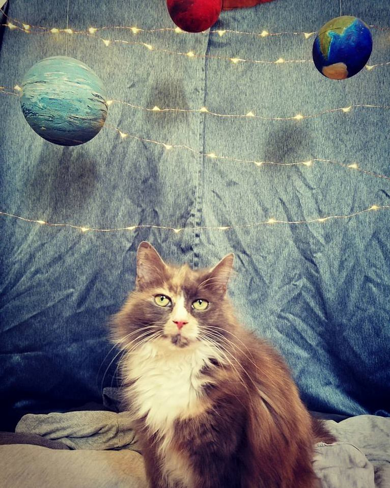 Shes out of this world mabel turns 9 today