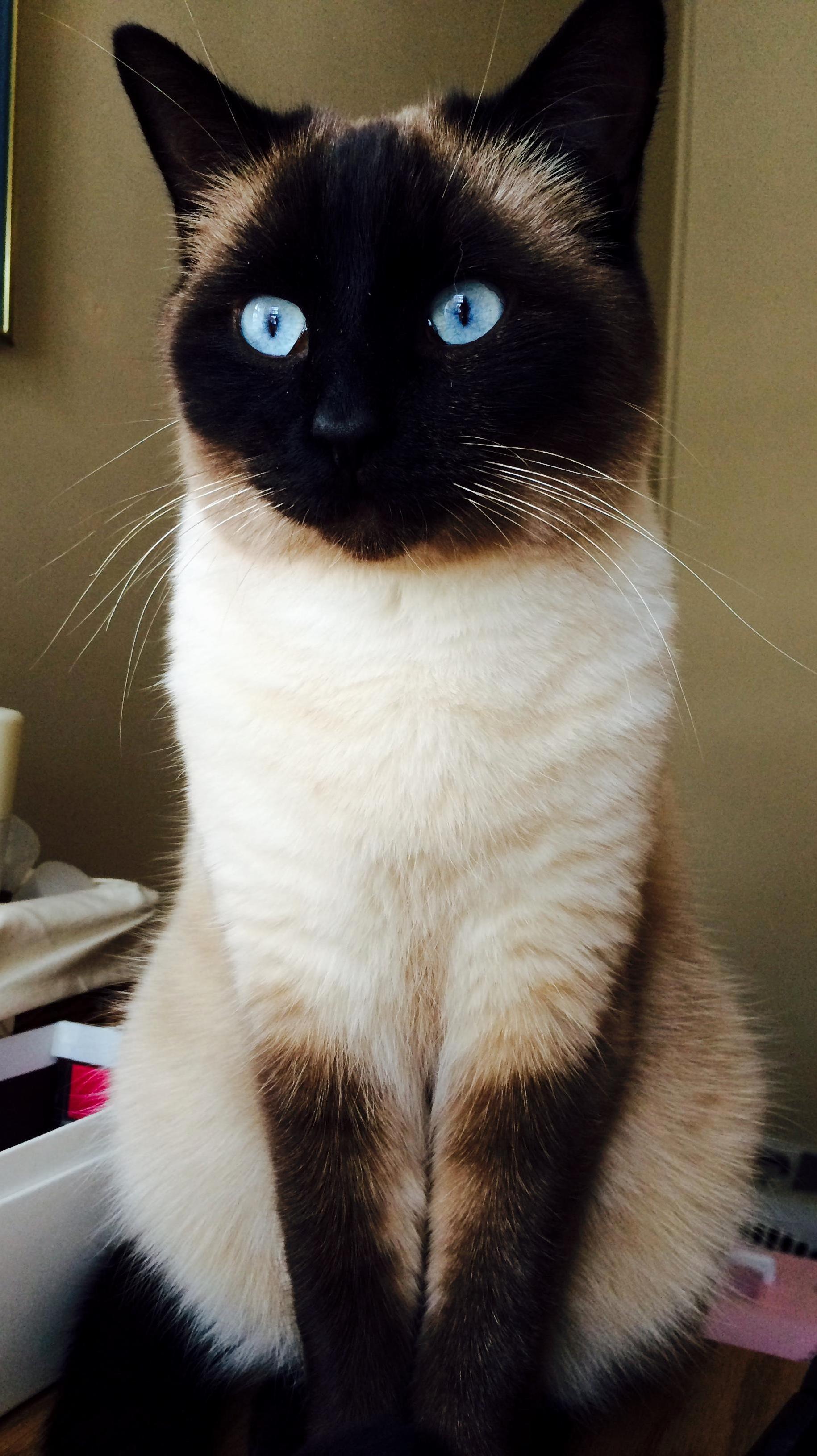 Snoop catt doing what snoop catt does best staring blankly