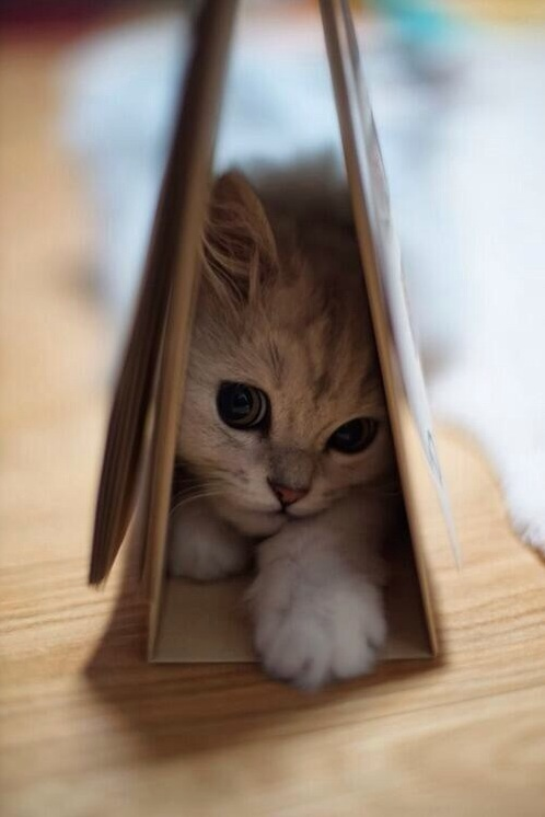 Still shy
