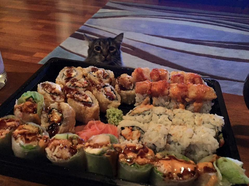 Taking pictures of my sushi who doesnt when his little head popped up at the perfect time…
