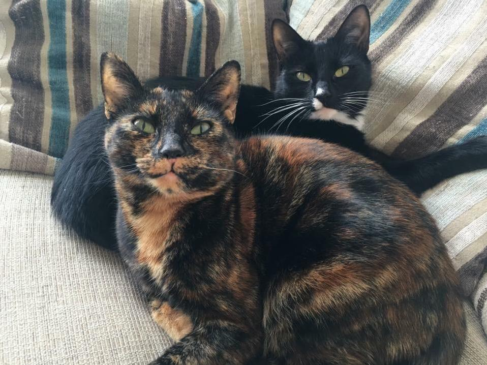 These are my cute little babies pixie front and binx back pixie is binxs mum and normally they hate each other apart from a very rare occasion when they stop to have a snuggle like pictured.