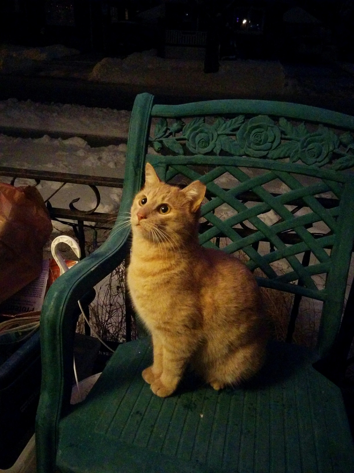This is the neighborhood stray that comes to visit me nightly. he is super cute and has become quite friendly. i have named him jimmy. xpost from rcatpictures