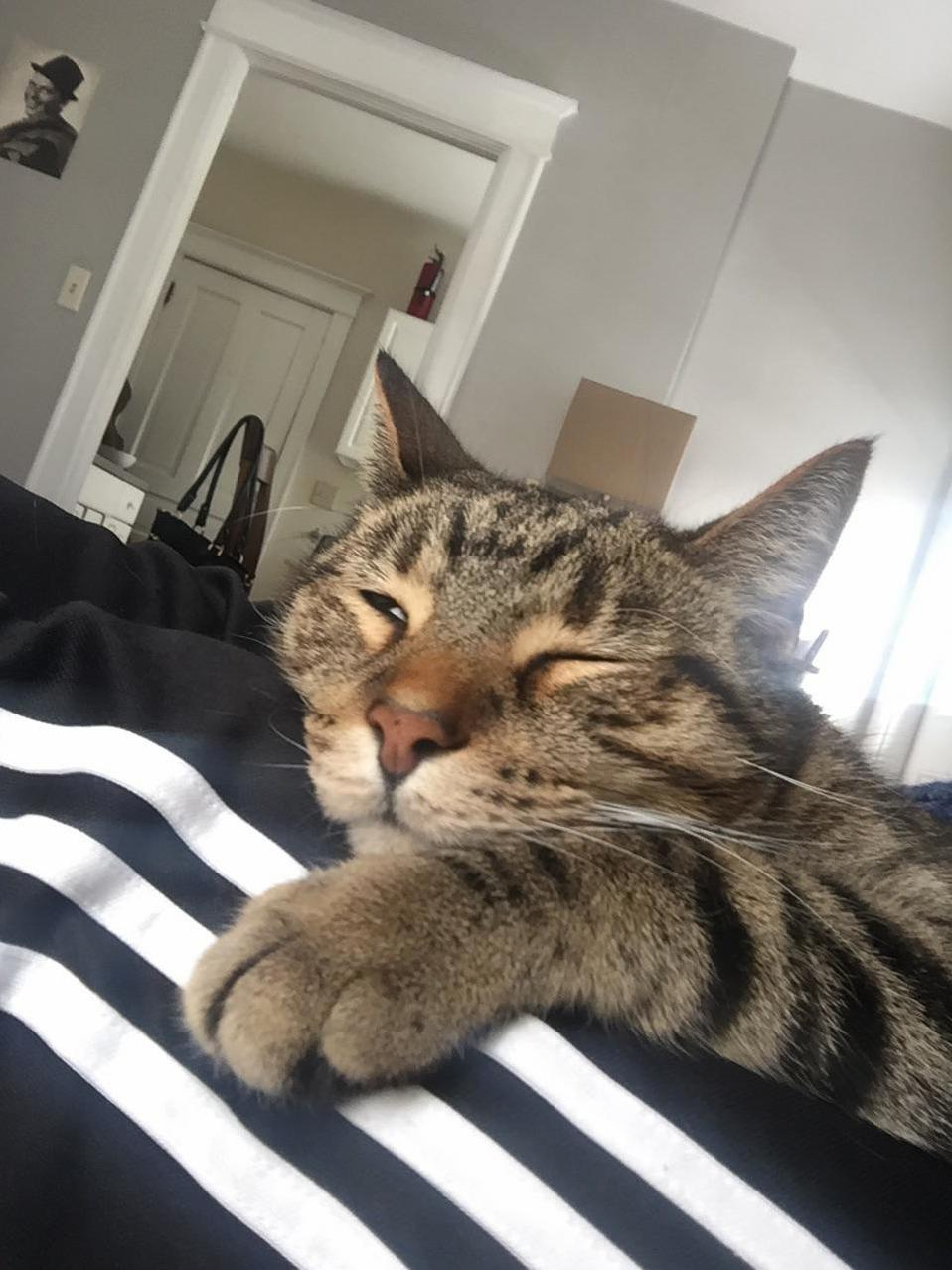 Thor is loving his saturday morning so far….