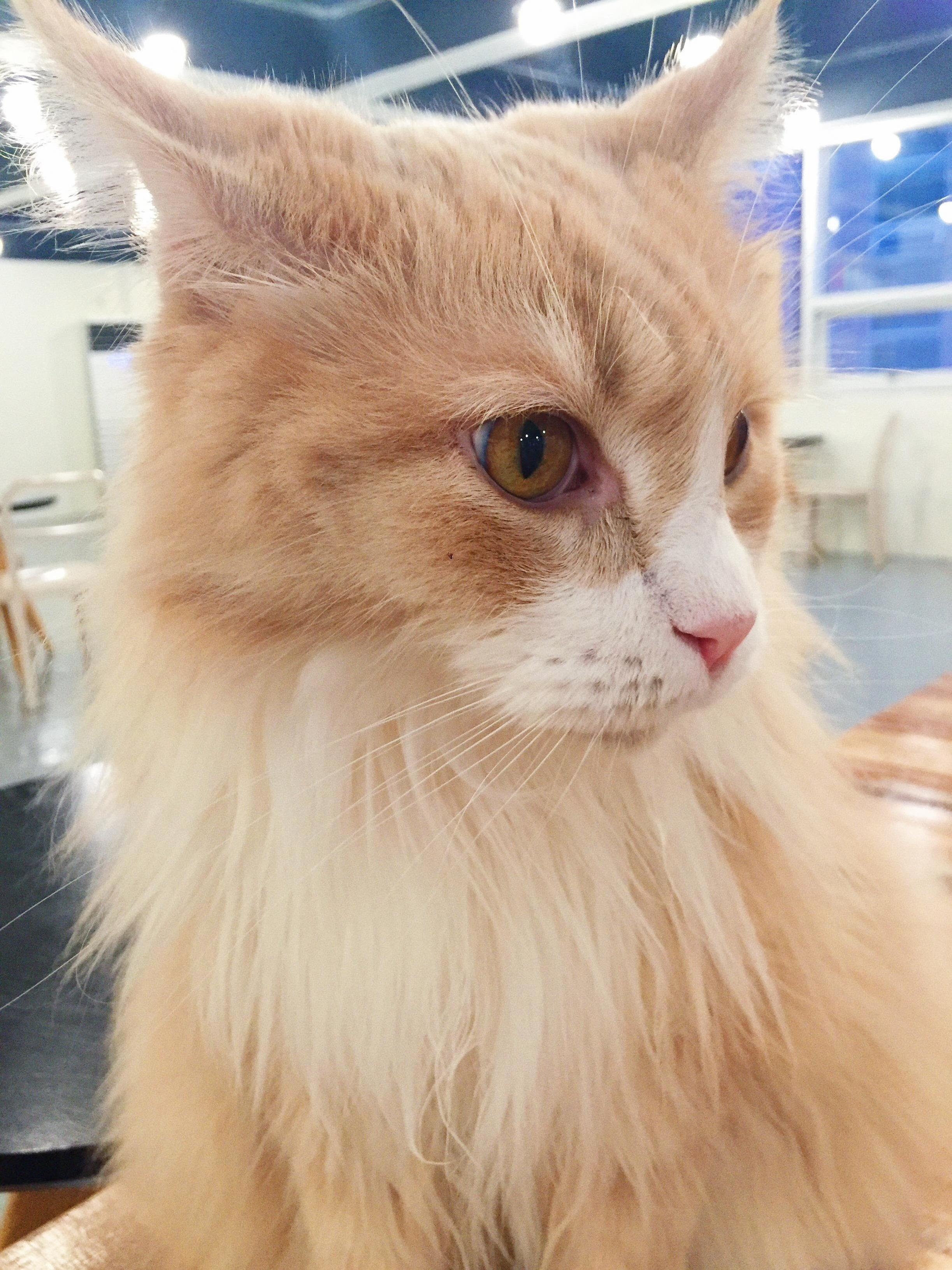 Went to a cat cafe and saw this gorgeous cat