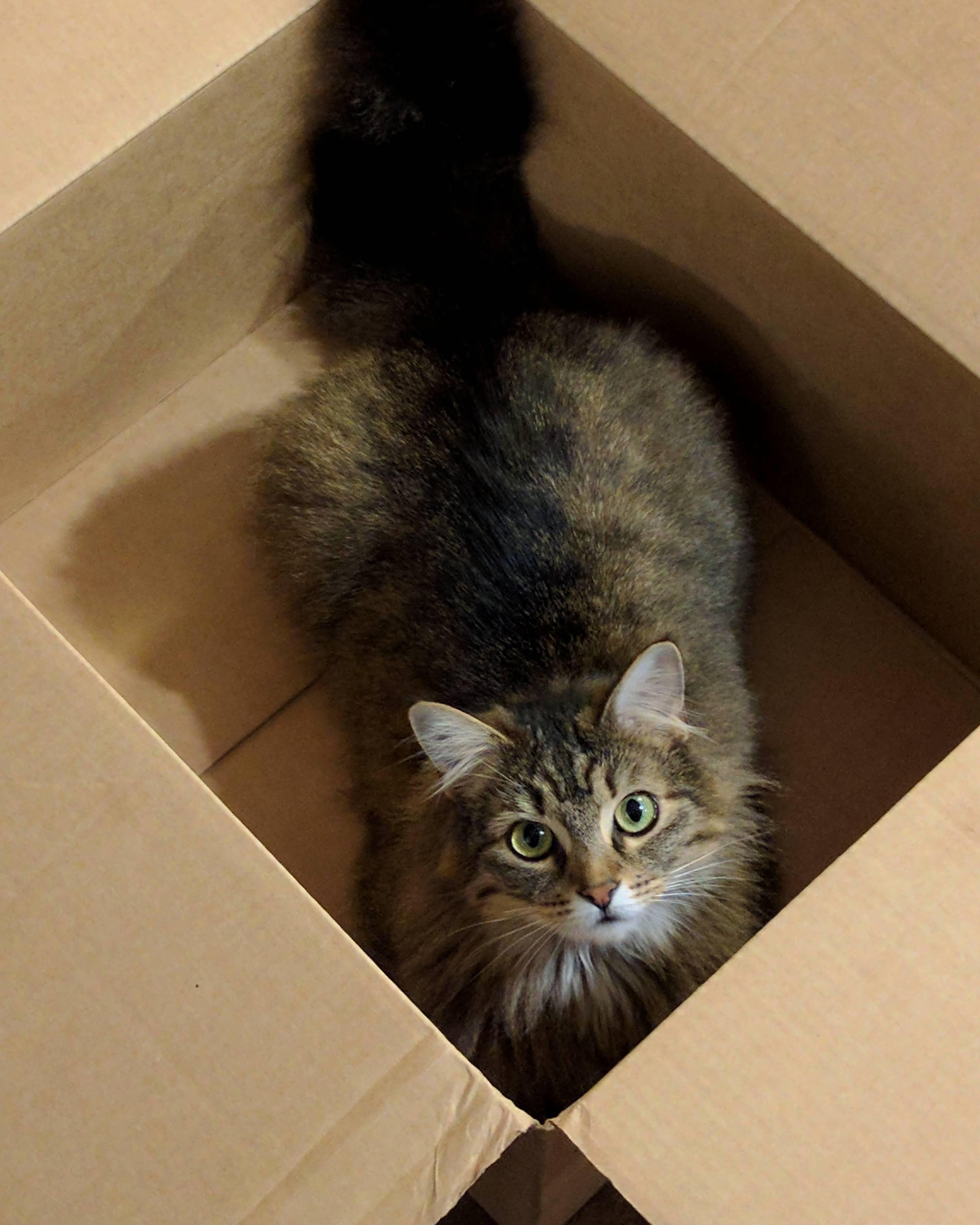 Whopper enjoying a nice new box