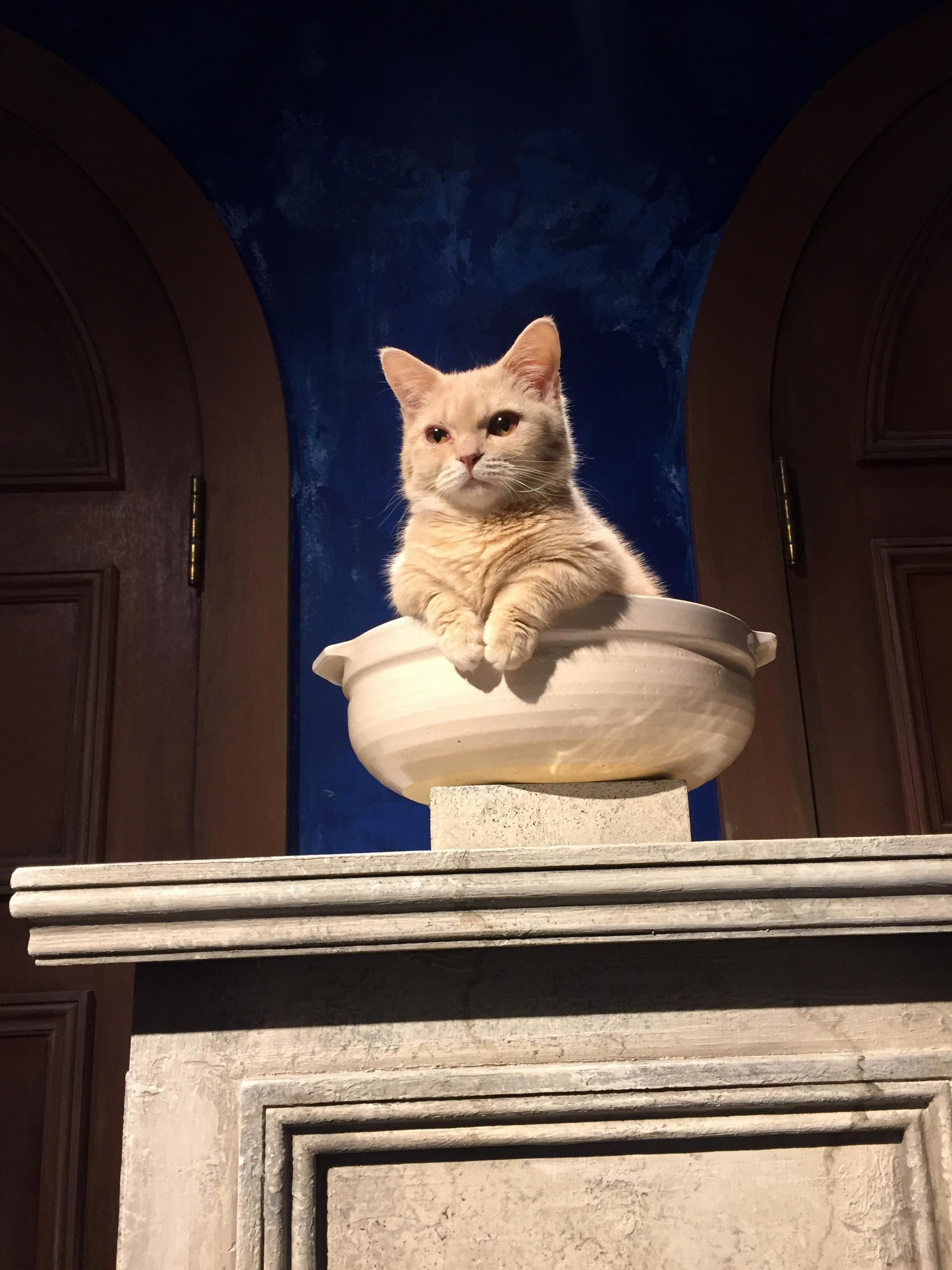 You may approach the throne peasant