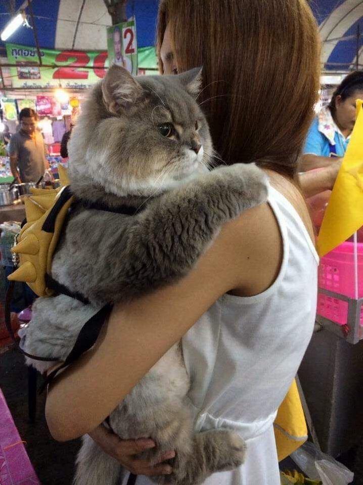 cutu kitty