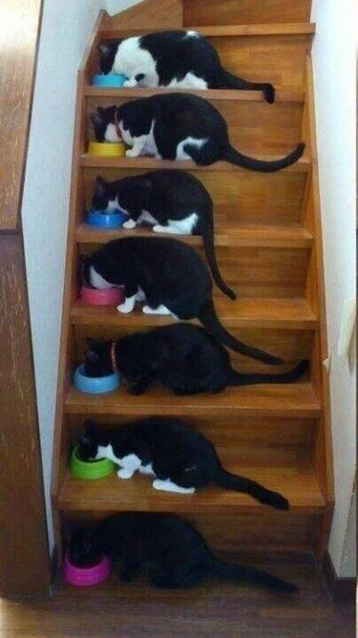 7 tuxedos enjoying a meal together.