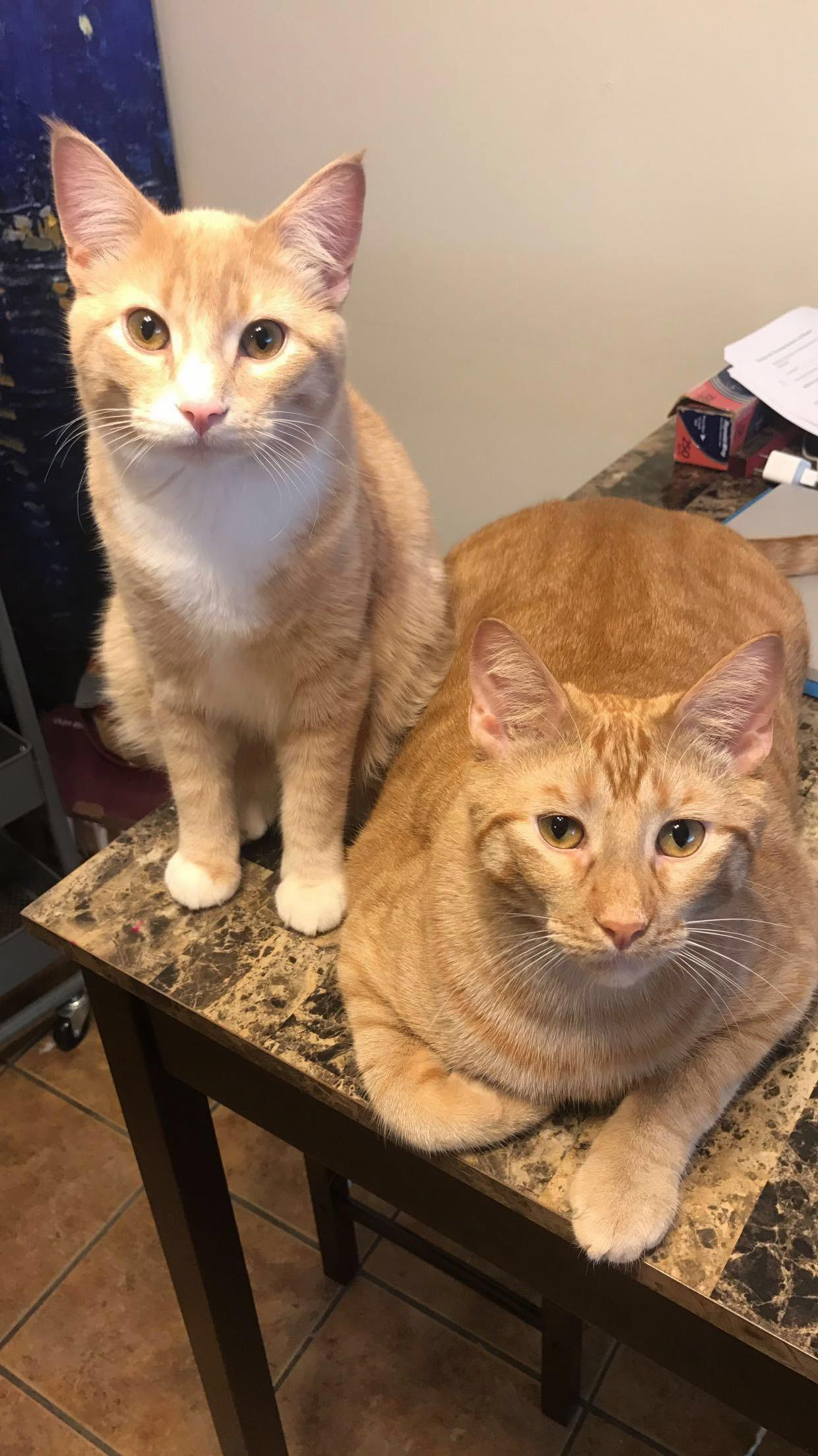 Gambit and beast like to hang out in the kitchen while i cook.