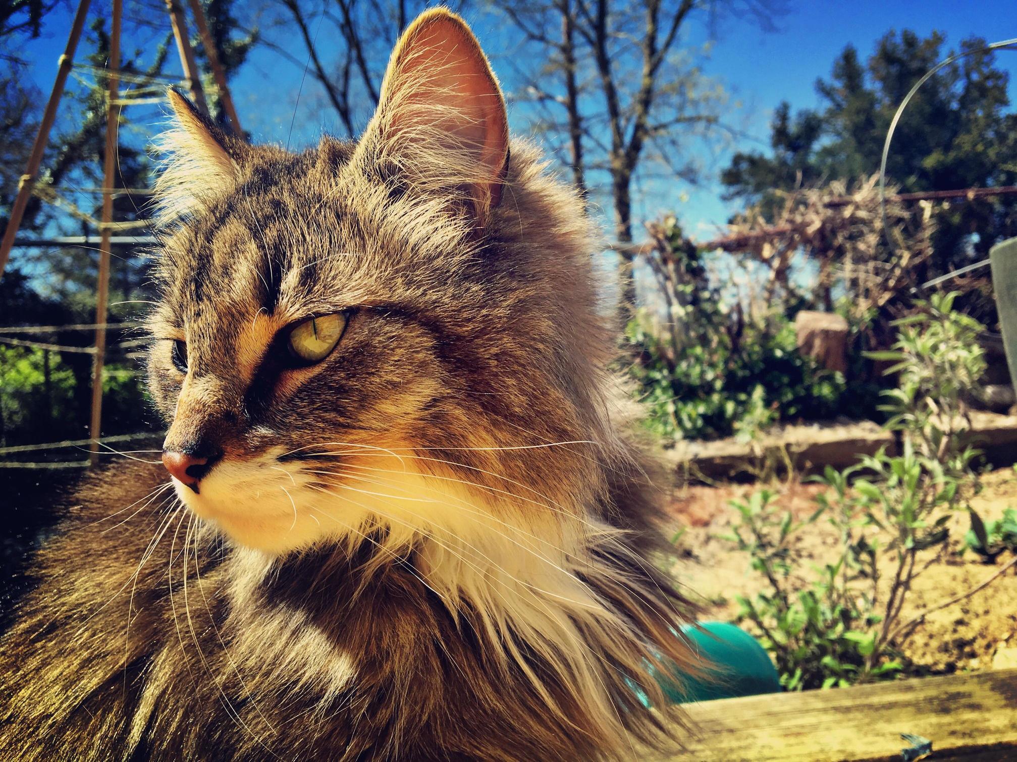 Garden cat champignon