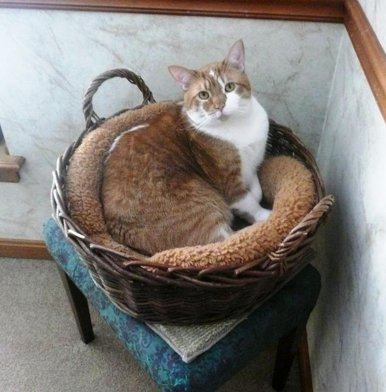 He still fits in his fav basket
