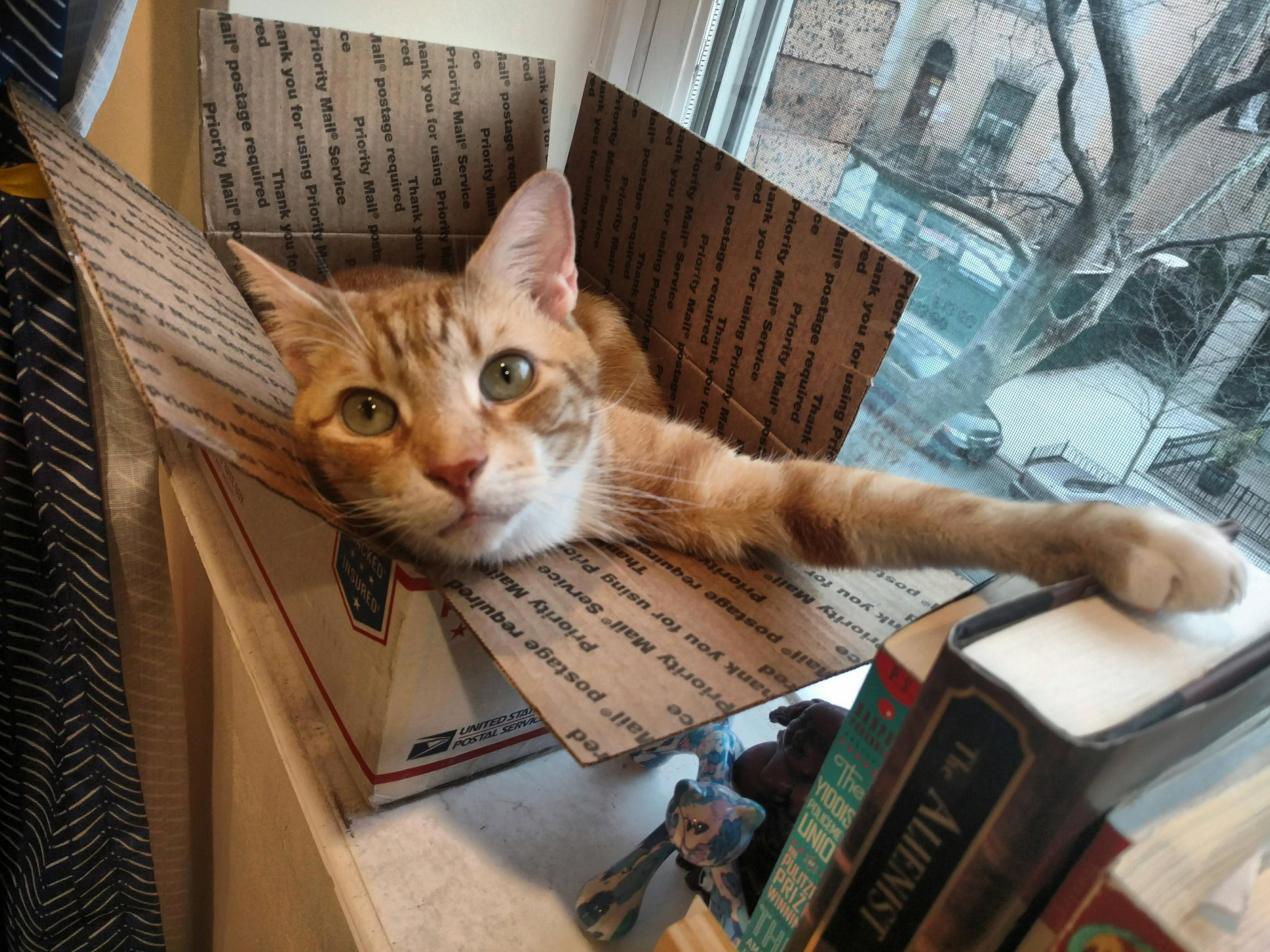 Hello human also these books are mine now