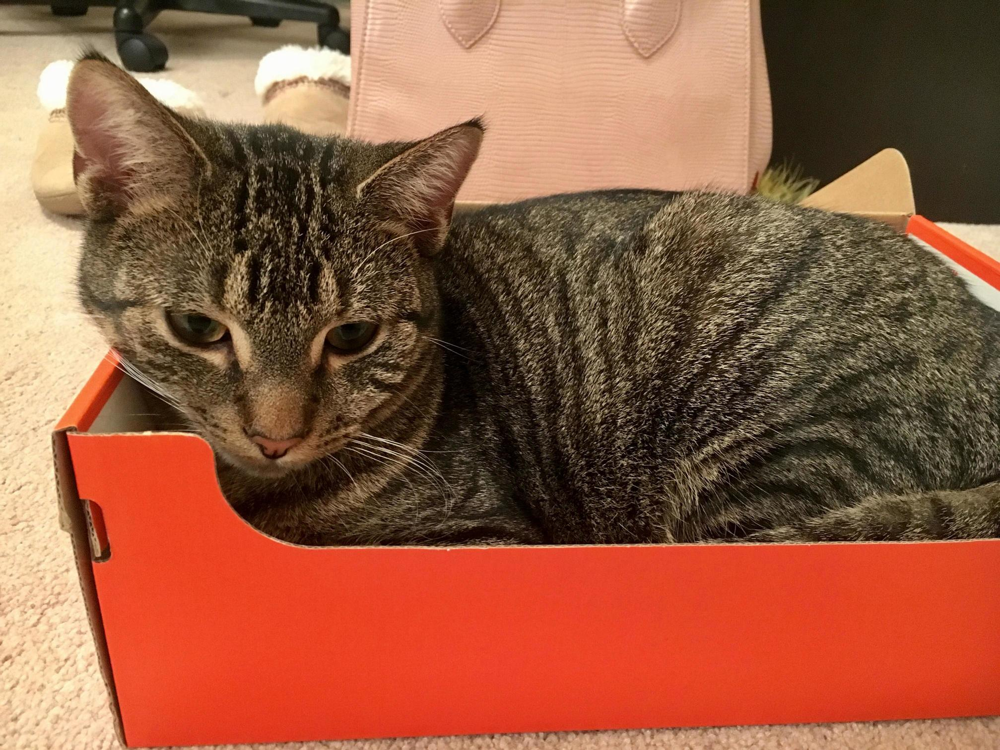 I have a perfectly nice bed for my cat but he prefers a shoebox