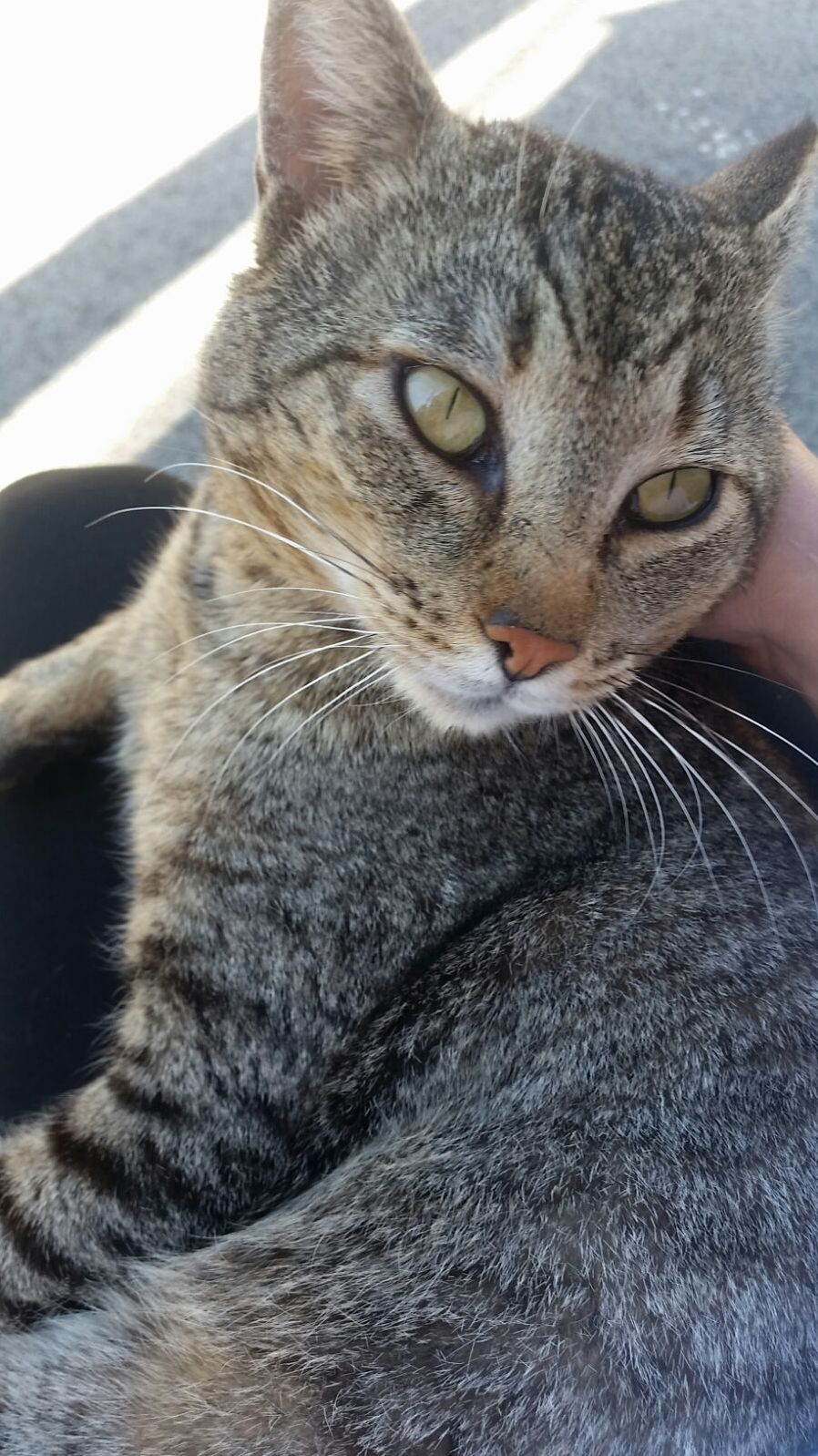 My friend was waiting for a bus and this lovely cat jumped up to her lap.