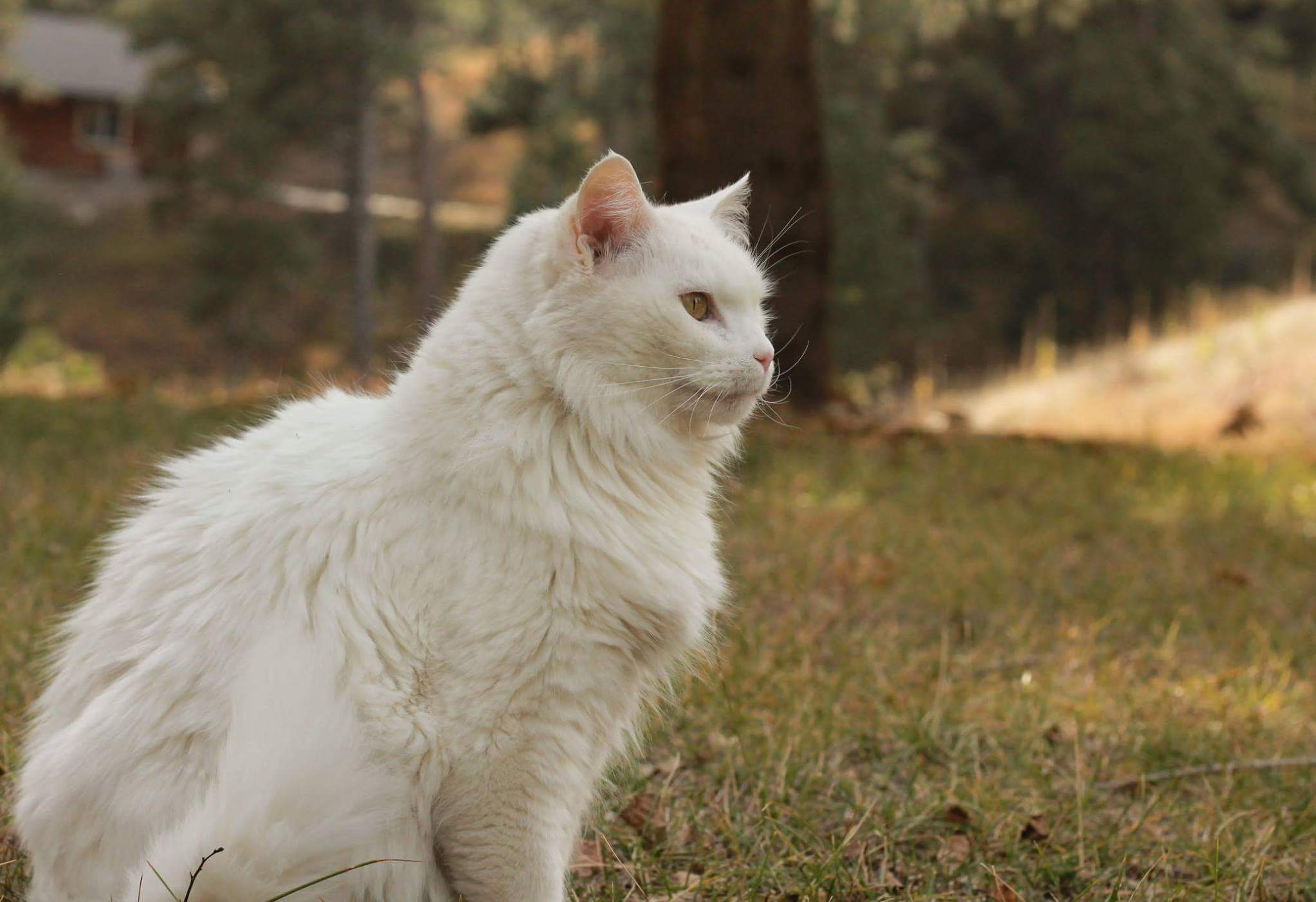 My majestic 17 year old floof.