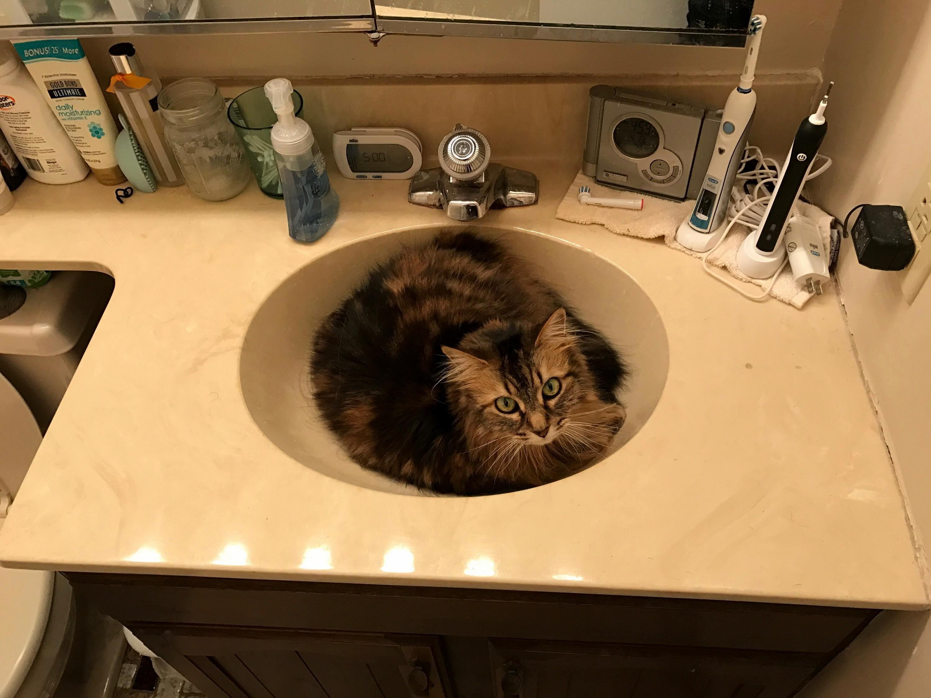 My sink wont drain