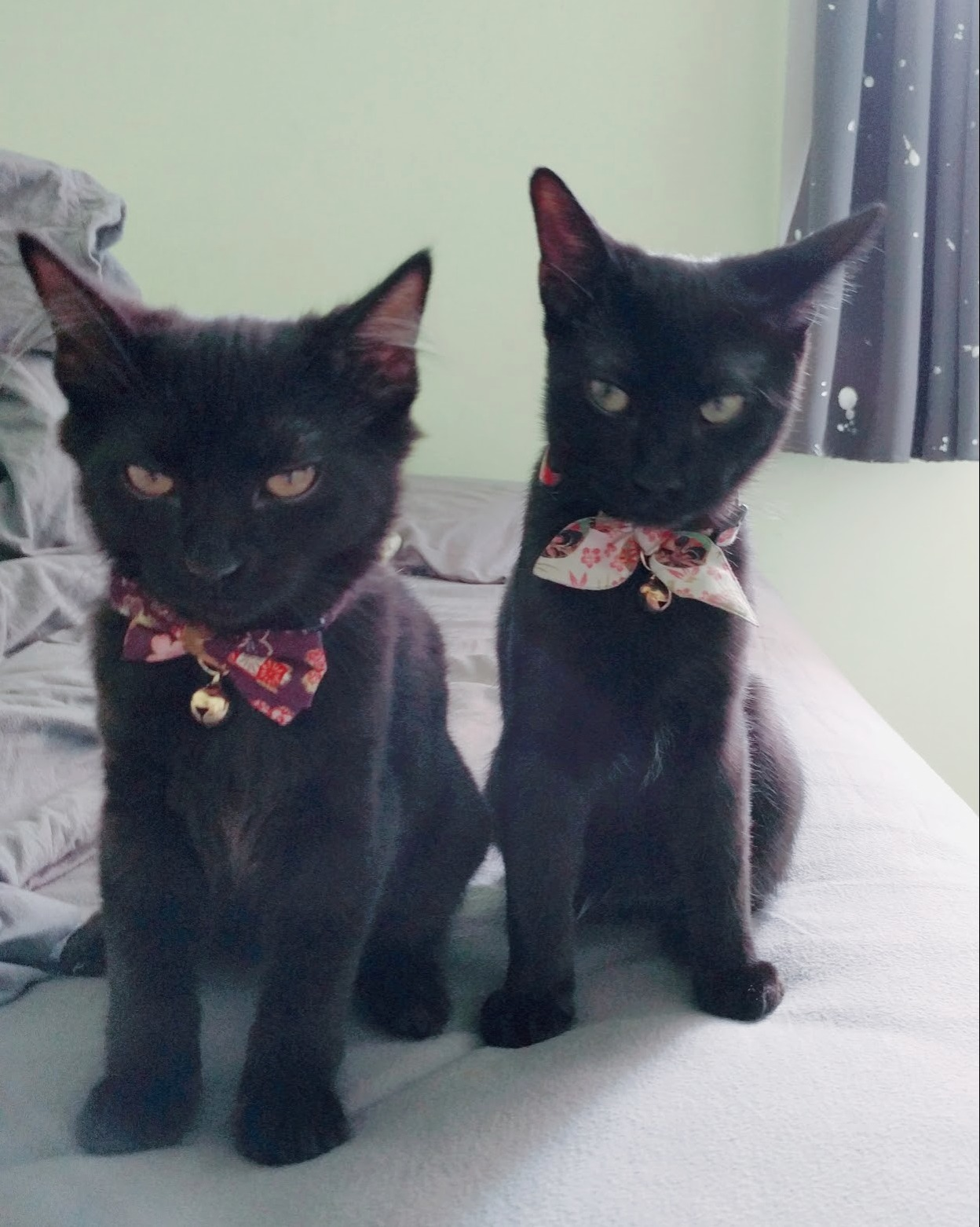 When your cats are tired of posing for pictures. x post rblackcats