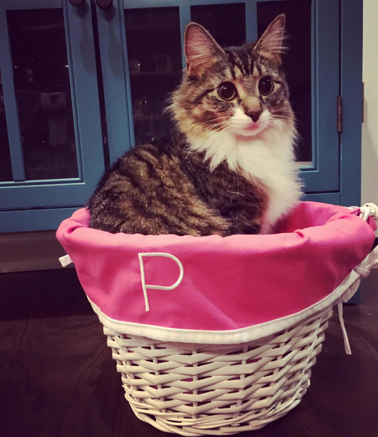 When your mom doesnt have grandkids so she buys your cats monogrammed easter baskets