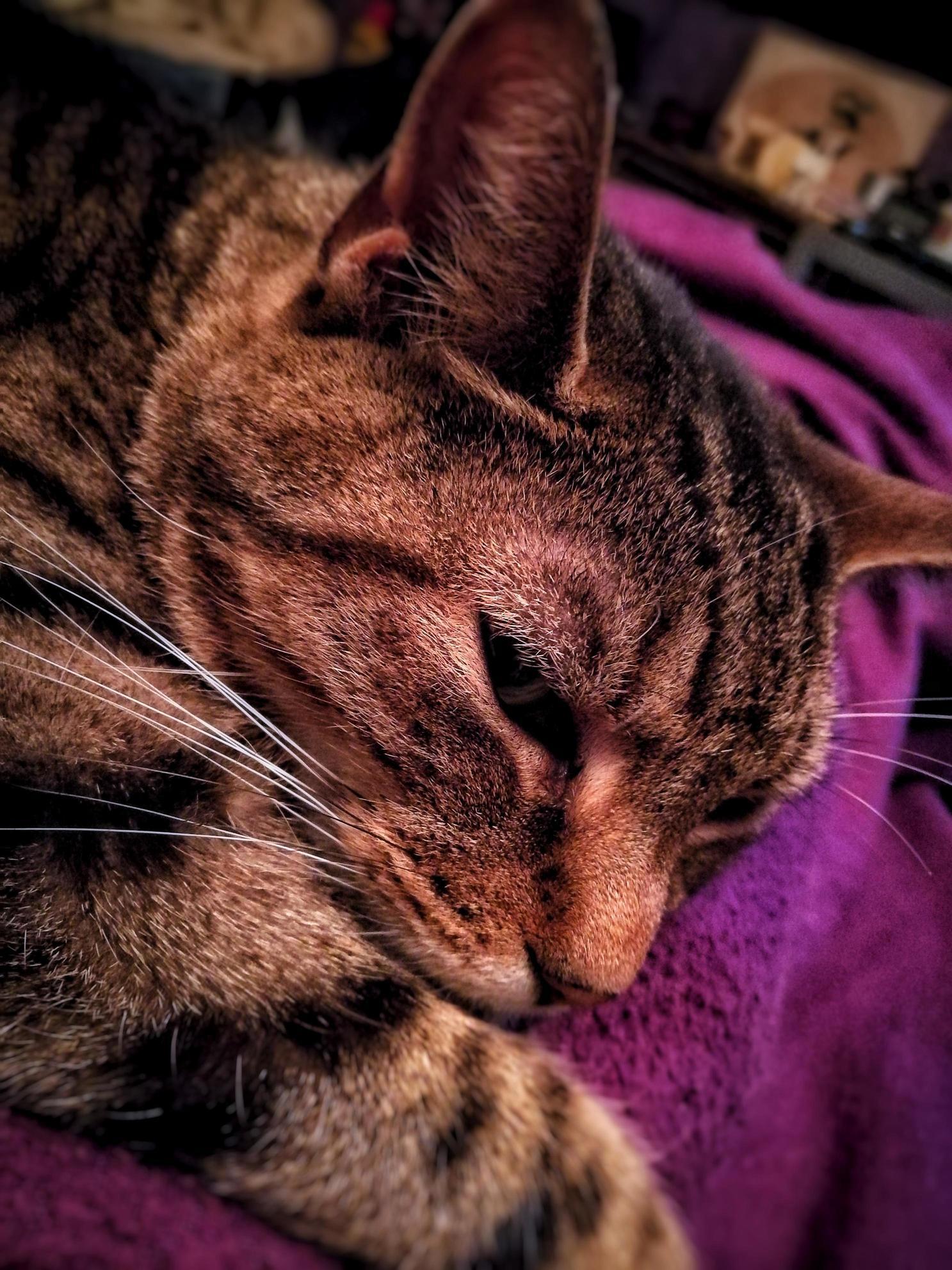 A sleepy fudge