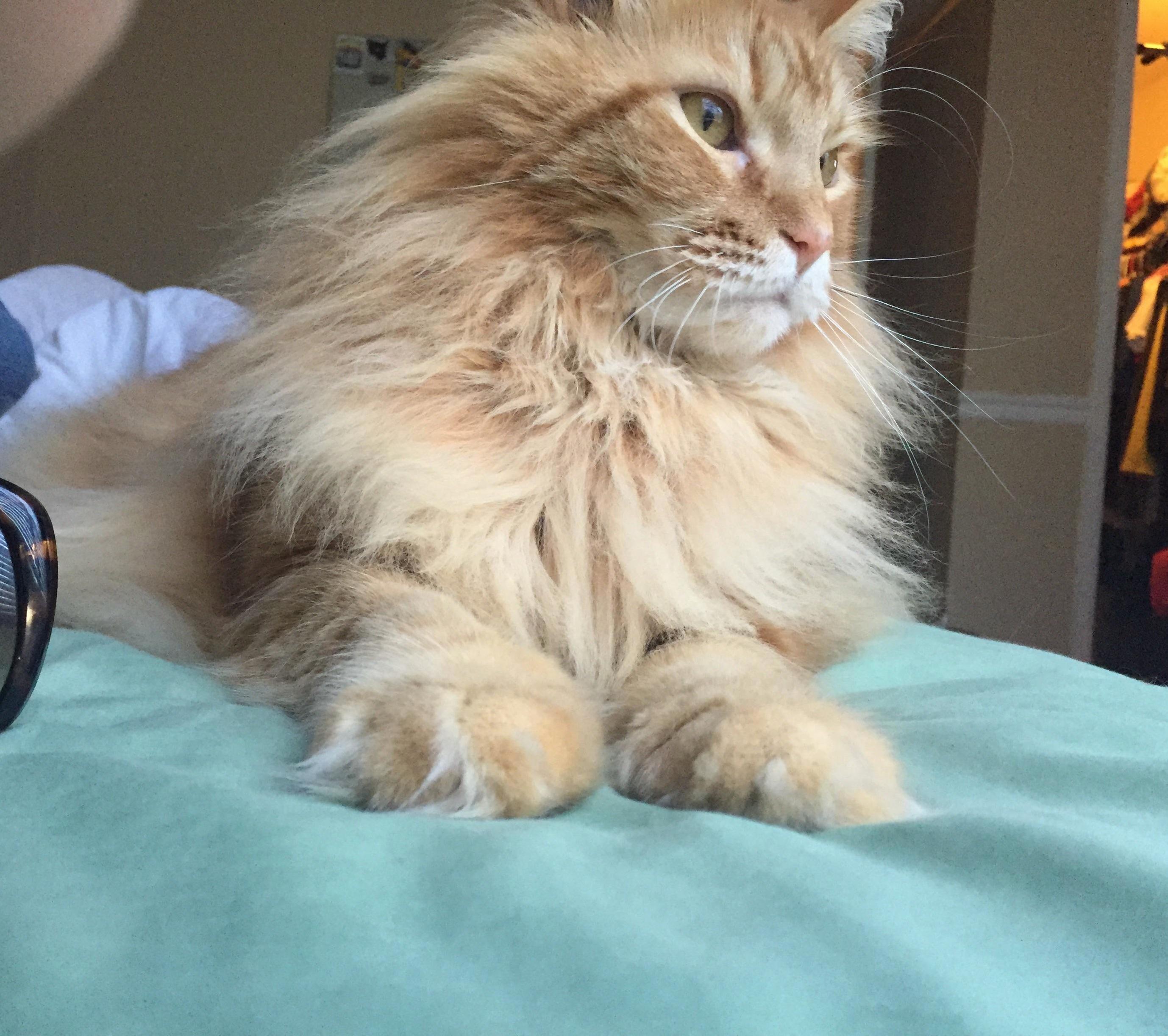 Albus so handsome