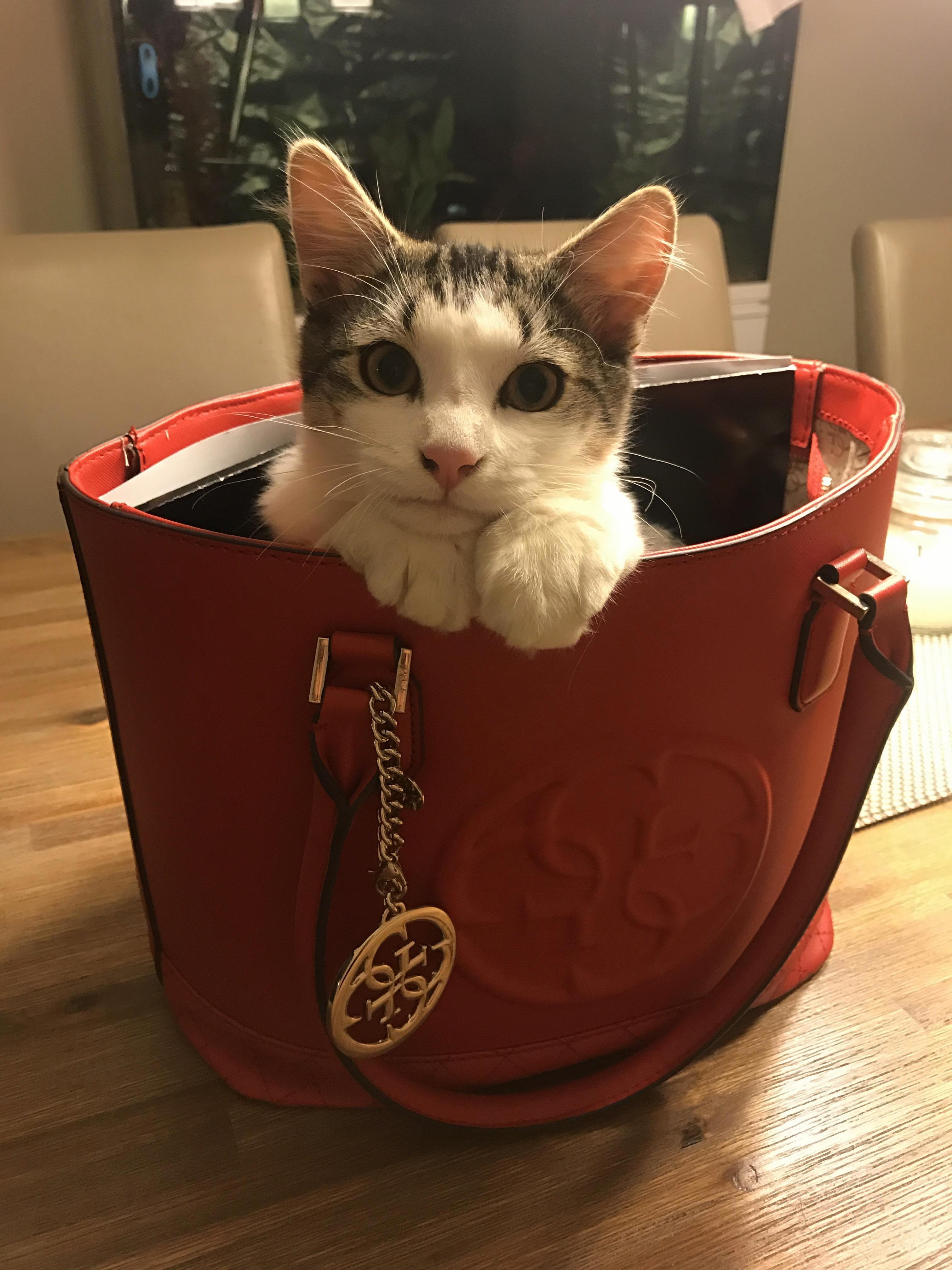 Alf in my mums handbag