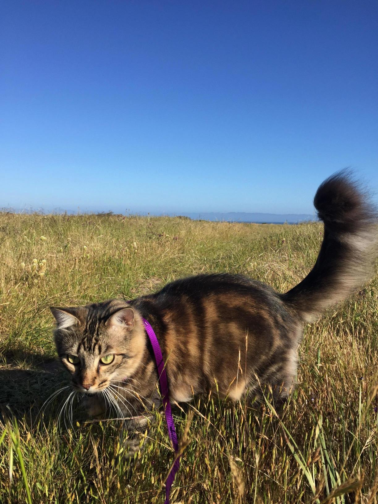 Alvin enjoying the central coast of california ..