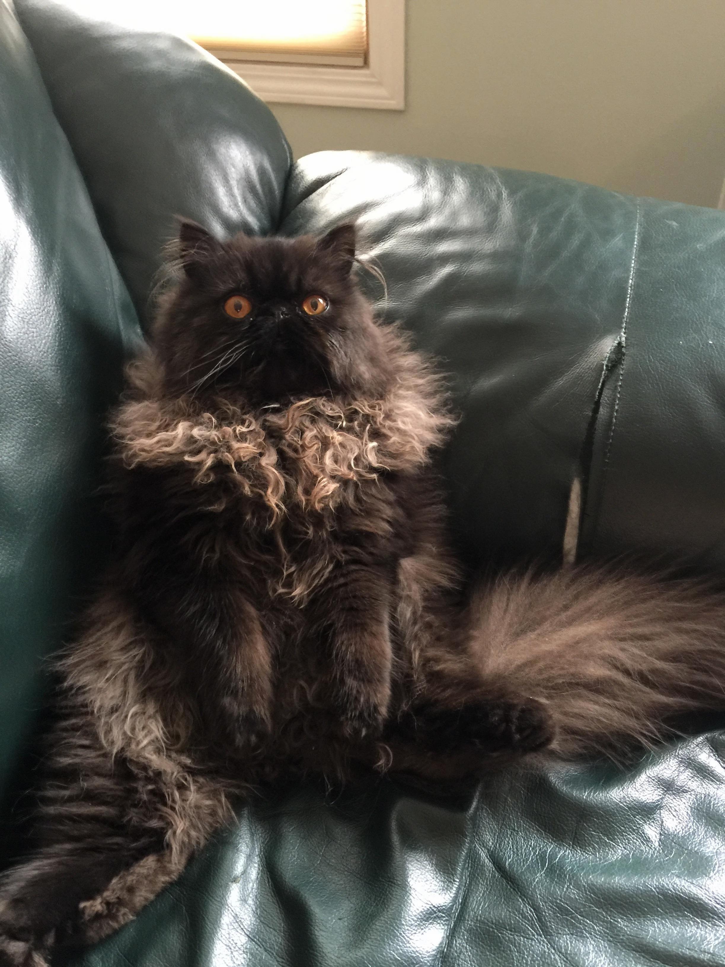 Bachelor cat