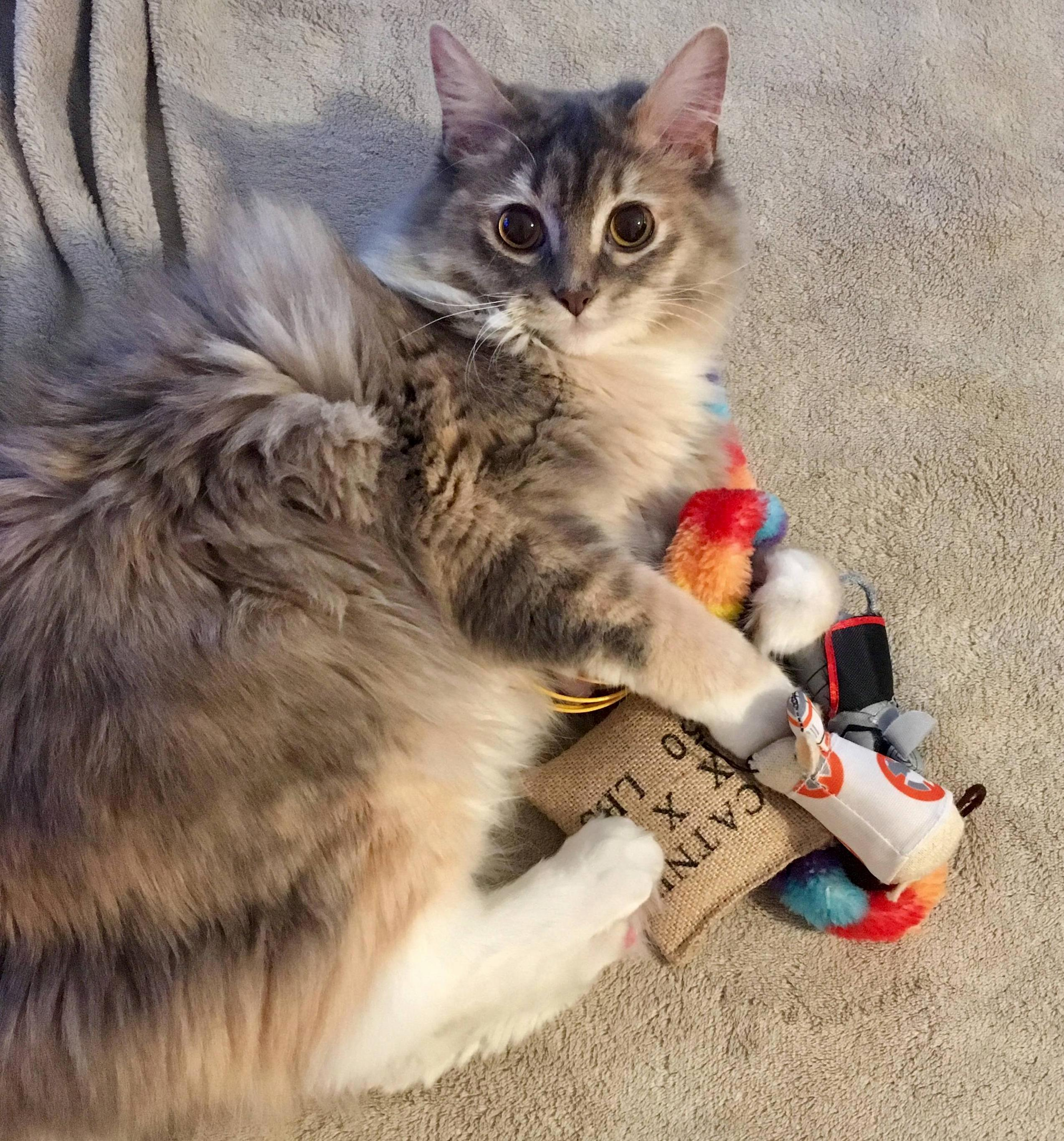 Beef hoarding her toys